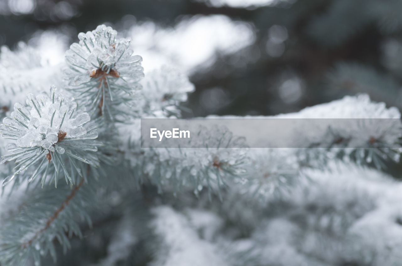 winter, cold temperature, snow, weather, nature, white color, beauty in nature, selective focus, no people, close-up, fragility, frozen, day, outdoors, ice, tree, flower, snowflake, branch, freshness
