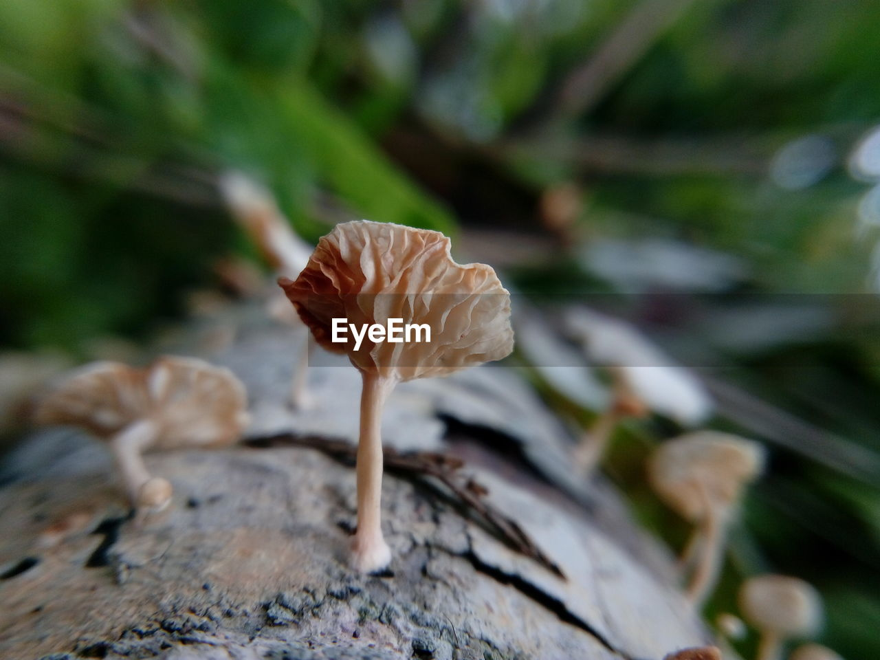 Close-up of mushroom growing on land