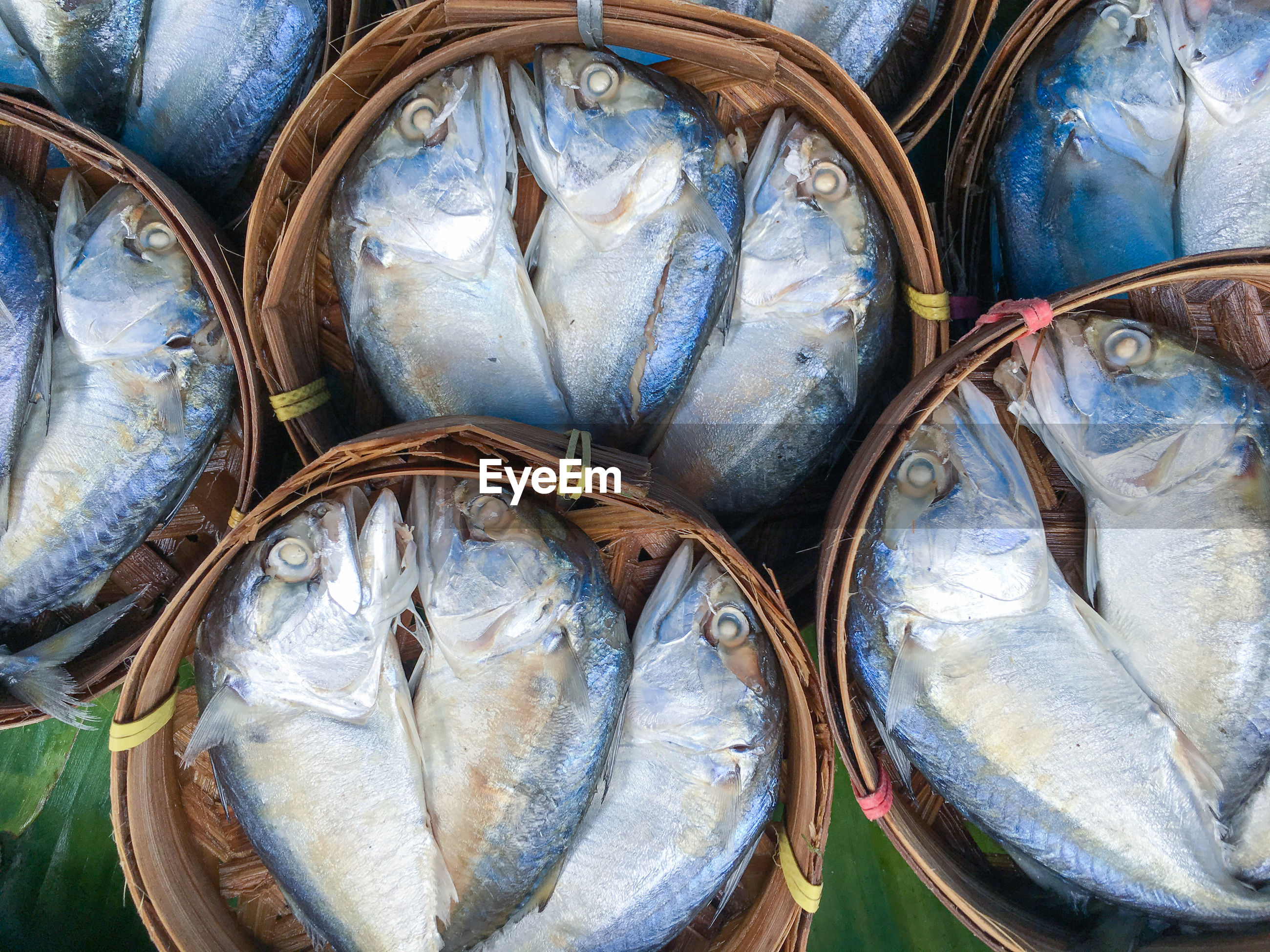 High angle view of fish for sale at market