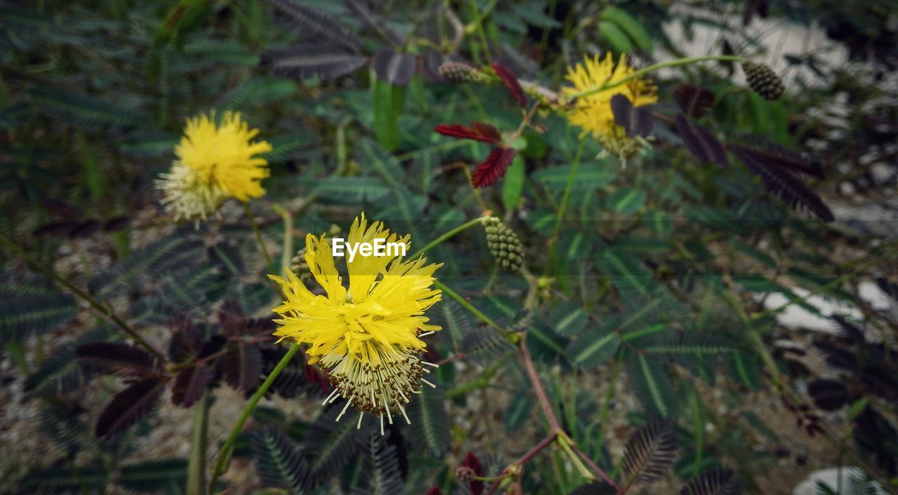 flower, yellow, growth, nature, flower head, fragility, plant, petal, freshness, beauty in nature, blossom, blooming, no people, day, outdoors, close-up