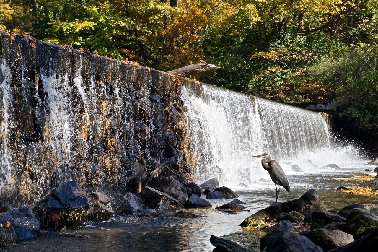 waterfall, water, flowing water, motion, nature, rock - object, long exposure, splashing, outdoors, day, beauty in nature, river, scenics, no people, cliff, tree, animal themes, power in nature, bird, mammal