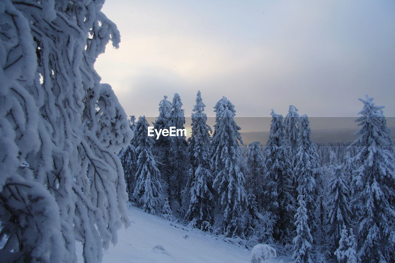winter, cold temperature, snow, tree, plant, beauty in nature, sky, tranquility, frozen, nature, tranquil scene, environment, no people, scenics - nature, covering, white color, non-urban scene, land, day, woodland, pine tree, coniferous tree, extreme weather, snowcapped mountain, icicle
