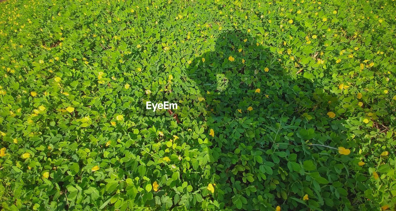 green color, nature, growth, green, leaf, day, outdoors, plant, full frame, no people, beauty in nature, grass, freshness