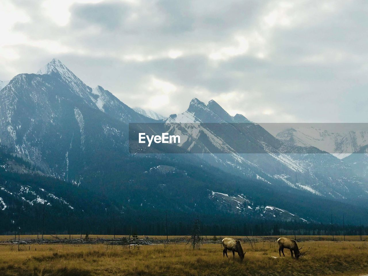 View of horses on field by mountain against sky