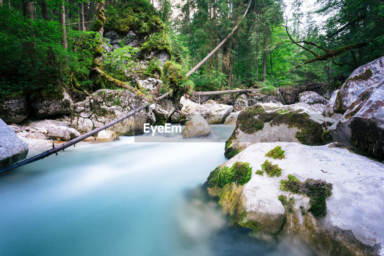 tree, plant, water, forest, beauty in nature, flowing water, scenics - nature, rock, rock - object, solid, nature, land, flowing, no people, river, day, stream - flowing water, tranquility, long exposure, outdoors, power in nature, rainforest