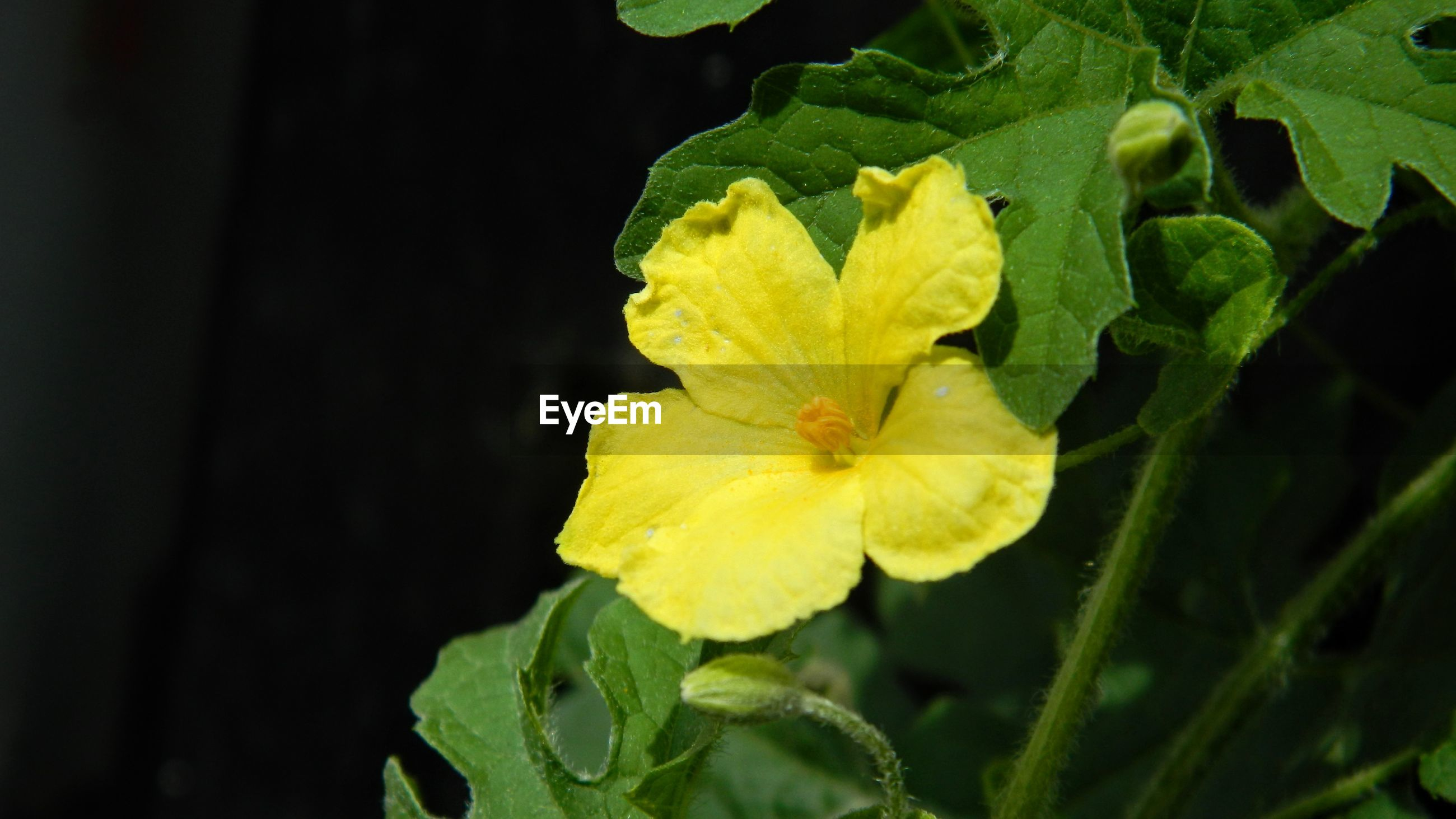CLOSE-UP OF YELLOW FLOWER AND LEAVES