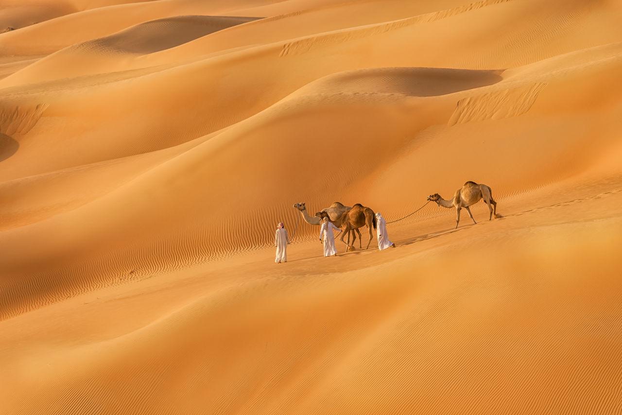 sand dune, desert, sand, mammal, domestic animals, arid climate, climate, animal, land, scenics - nature, group of animals, landscape, camel, animal themes, vertebrate, pets, working animal, domestic, nature, environment, no people, atmospheric