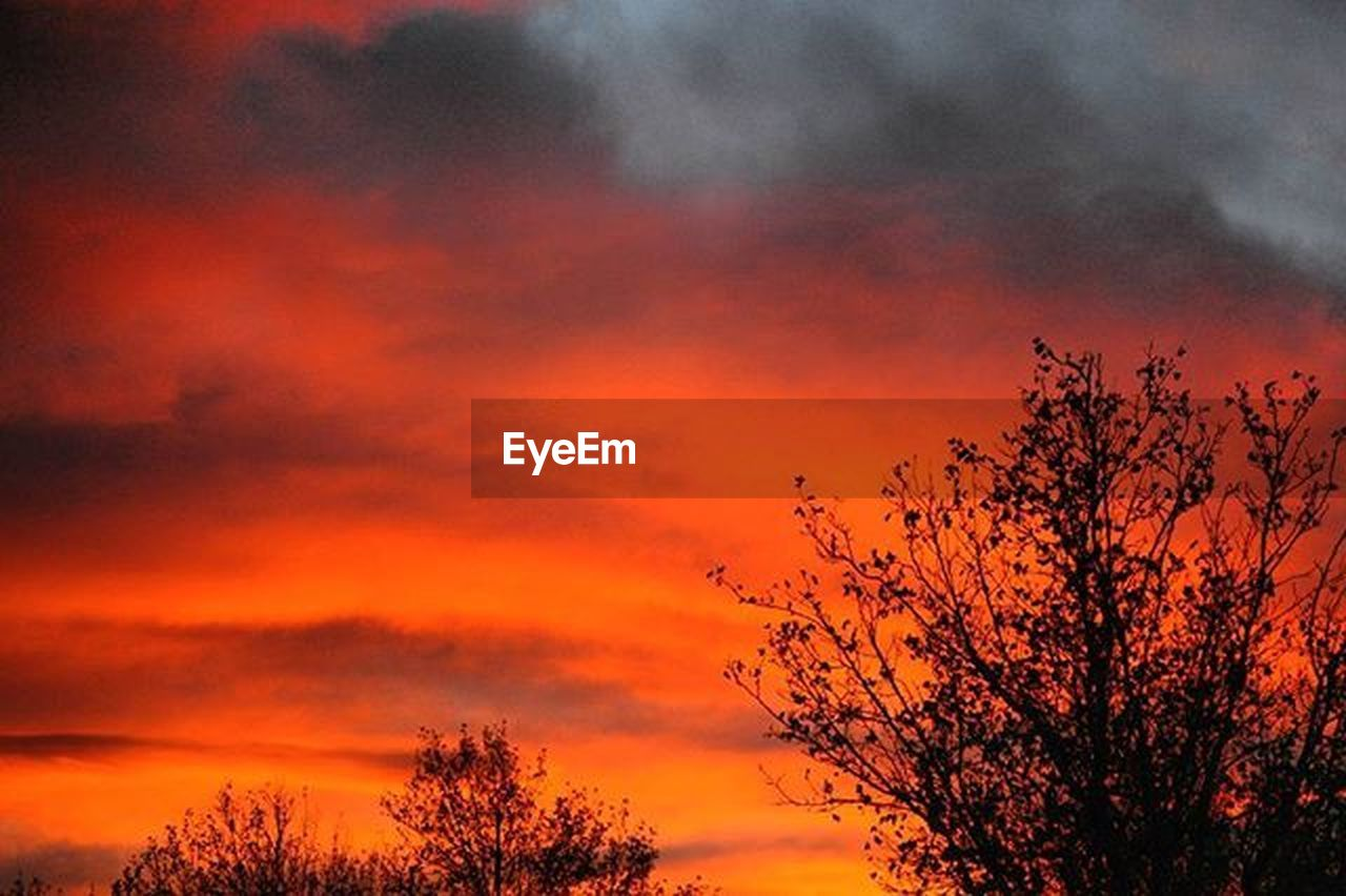 tree, sunset, dramatic sky, orange color, multi colored, nature, outdoors, sky, red, silhouette, no people, beauty in nature, cloud - sky, scenics, forest fire, day