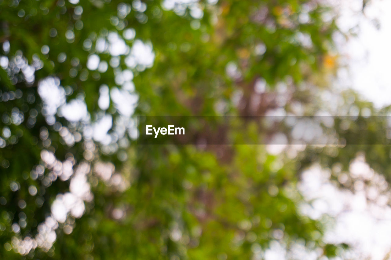 tree, plant, growth, day, beauty in nature, no people, nature, green color, low angle view, branch, outdoors, selective focus, tranquility, focus on foreground, close-up, plant part, land, leaf, backgrounds, forest, tree canopy