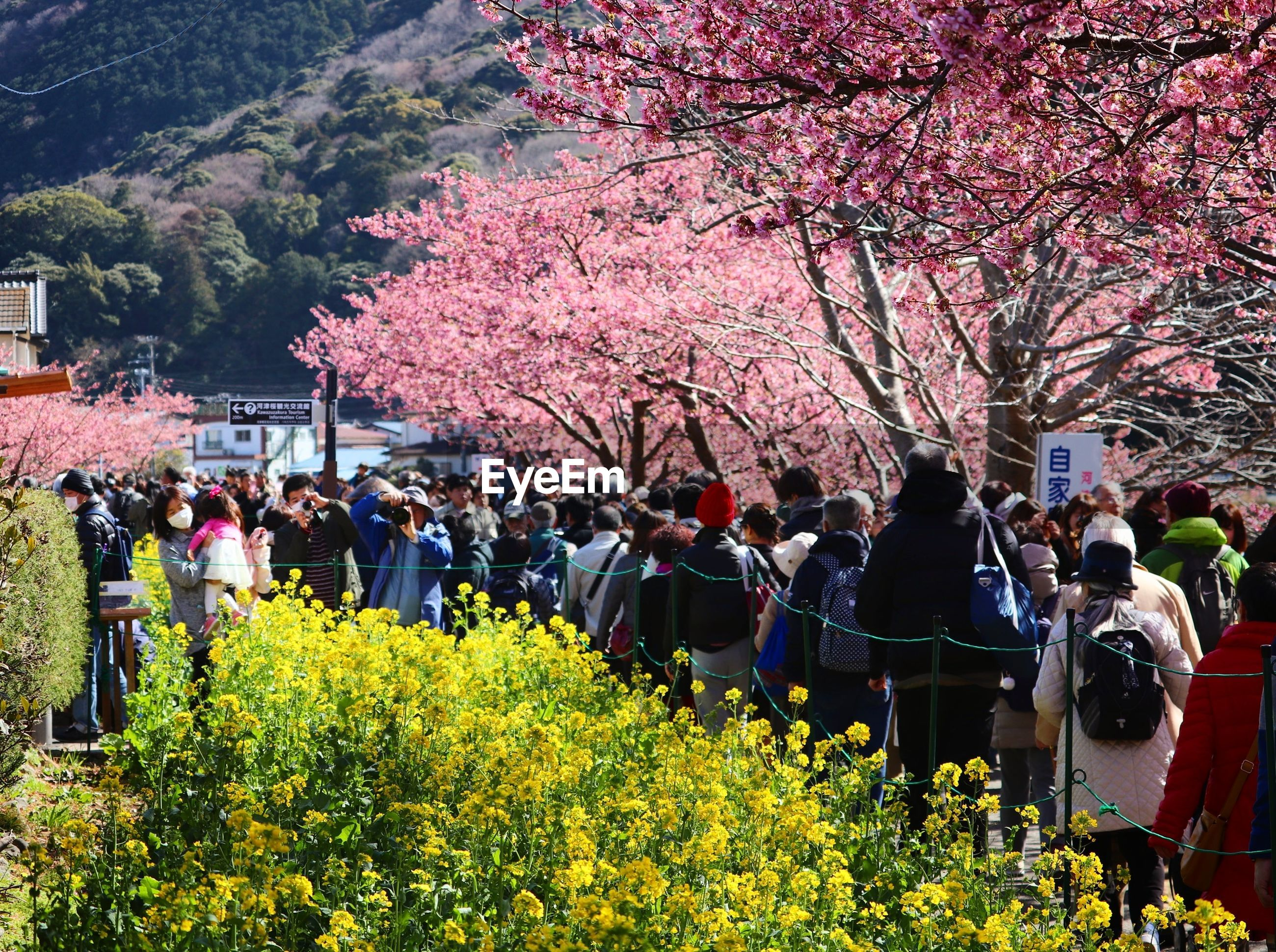 flower, tree, blossom, large group of people, springtime, nature, beauty in nature, growth, branch, real people, freshness, fragility, men, outdoors, plant, day, women, pink color, crowd, people