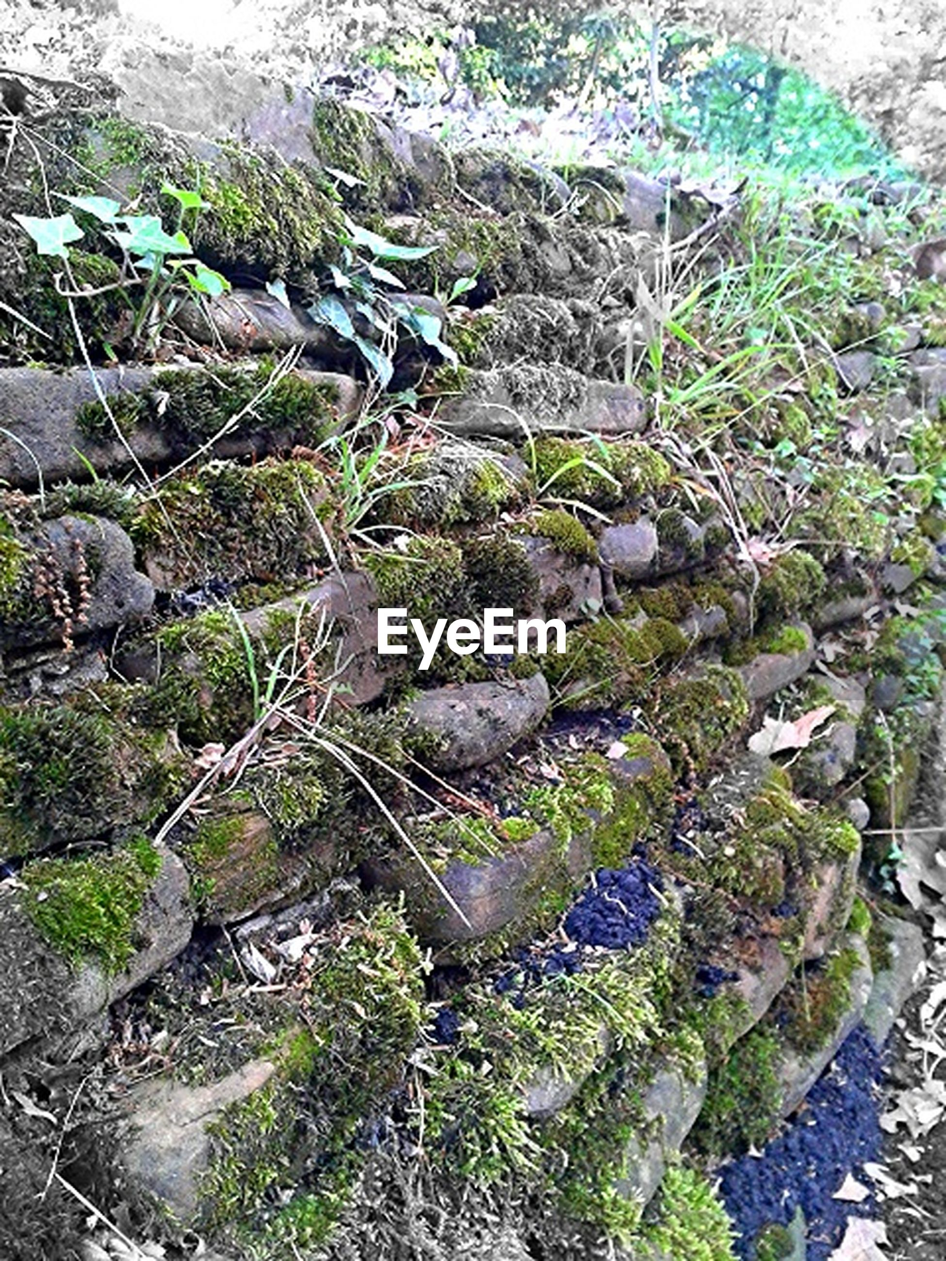 high angle view, rock - object, plant, growth, nature, moss, water, green color, beauty in nature, tranquility, forest, stream, day, stone - object, rock, outdoors, tree, no people, flowing water, tranquil scene