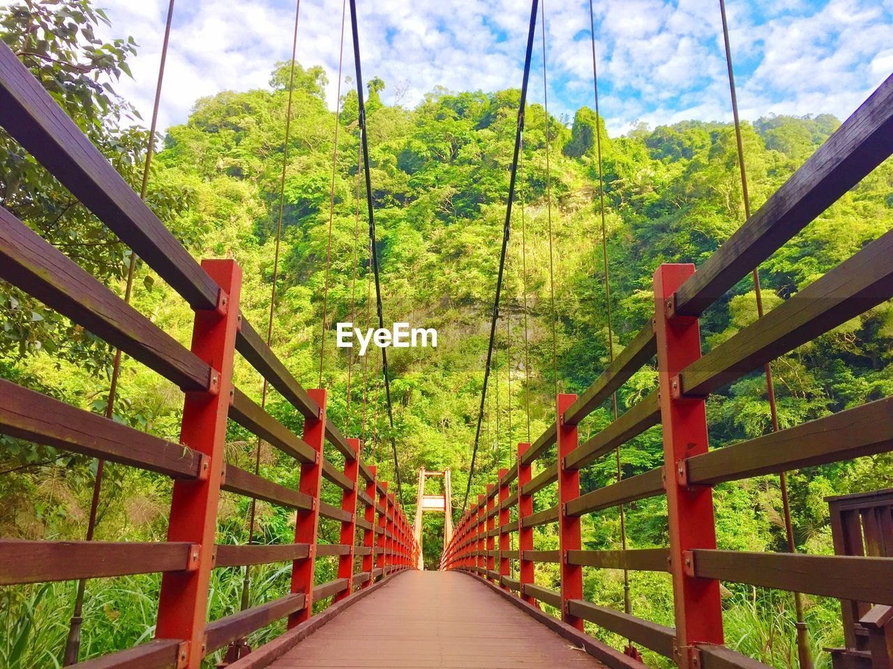 tree, the way forward, direction, plant, connection, green color, architecture, transportation, no people, day, built structure, railing, forest, bridge, nature, diminishing perspective, bridge - man made structure, land, growth, beauty in nature, footbridge, outdoors