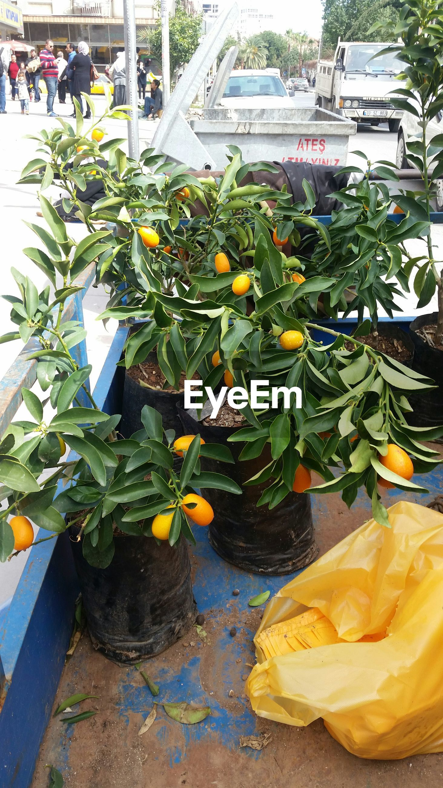 leaf, freshness, plant, yellow, flower, growth, potted plant, high angle view, day, outdoors, nature, front or back yard, food and drink, green color, fragility, fruit, sunlight, no people, water, building exterior