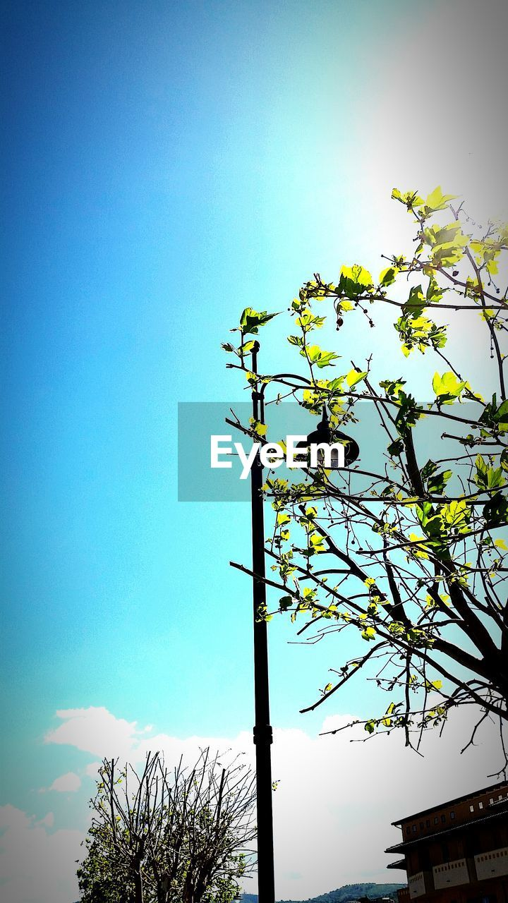 low angle view, tree, day, no people, sky, clear sky, outdoors, nature, growth, branch