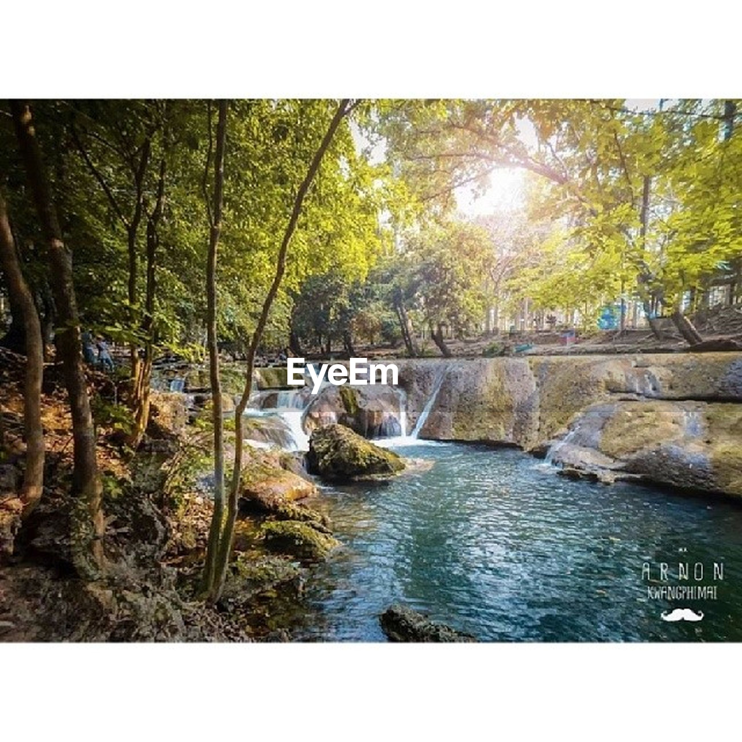 tree, transfer print, water, tranquility, auto post production filter, forest, tranquil scene, scenics, stream, nature, river, beauty in nature, rock - object, flowing, flowing water, growth, waterfront, day, non-urban scene, outdoors