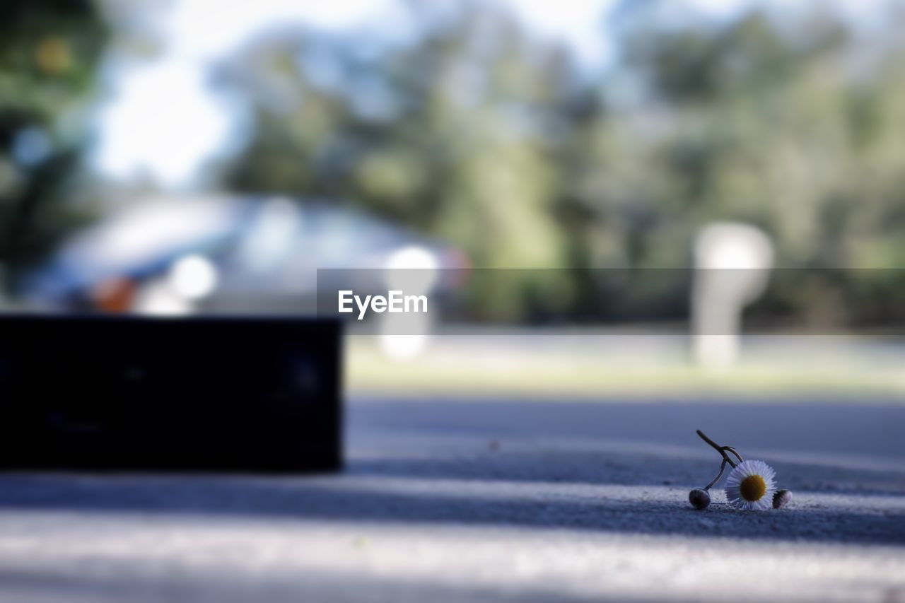 animal, day, invertebrate, insect, no people, animal themes, selective focus, one animal, animal wildlife, close-up, animals in the wild, focus on foreground, nature, outdoors, city, ant, mollusk, sunlight, street, animal body part, surface level