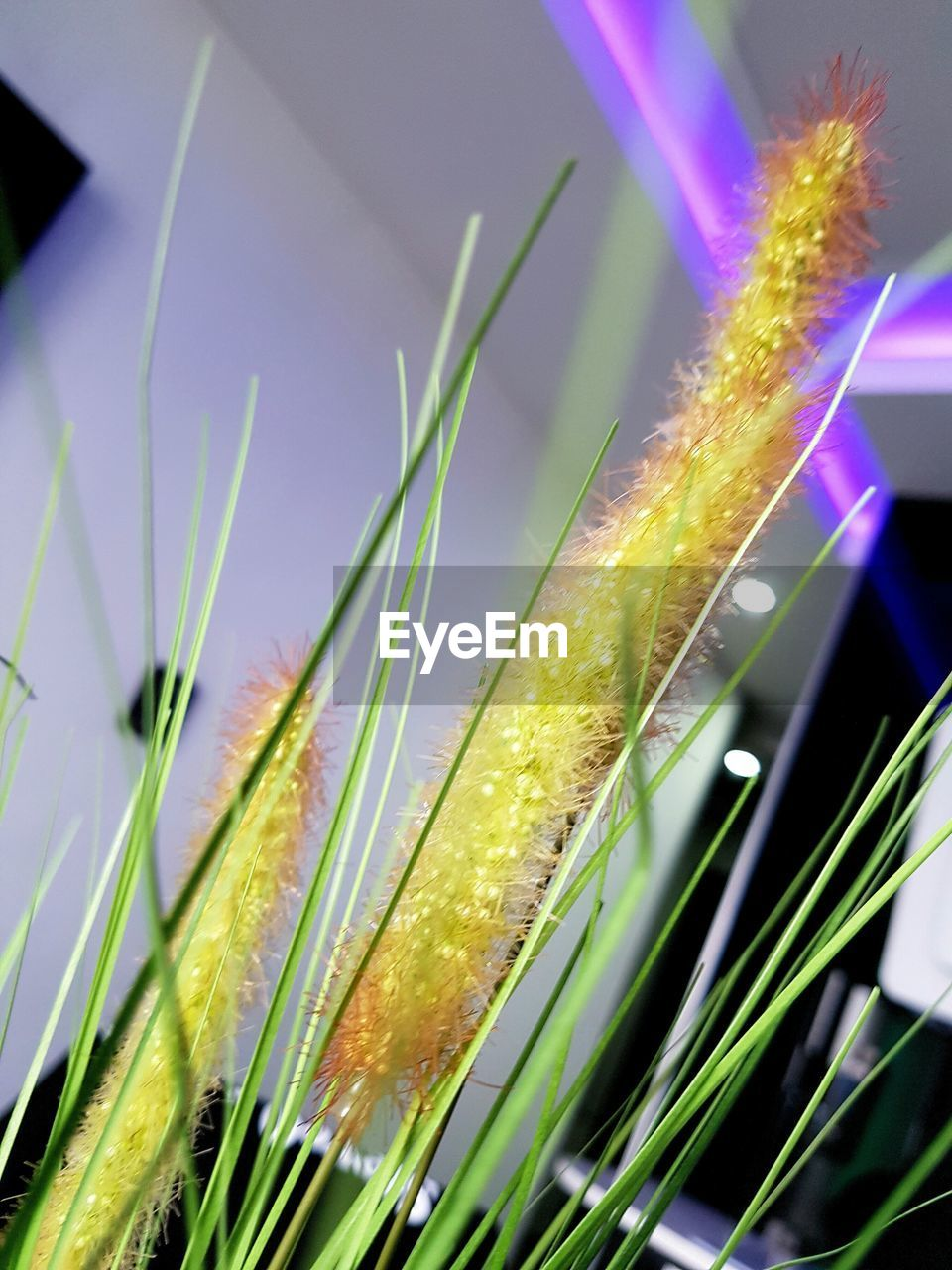 growth, green color, plant, nature, grass, close-up, no people, beauty in nature, outdoors, day, freshness, fragility, flower, sky