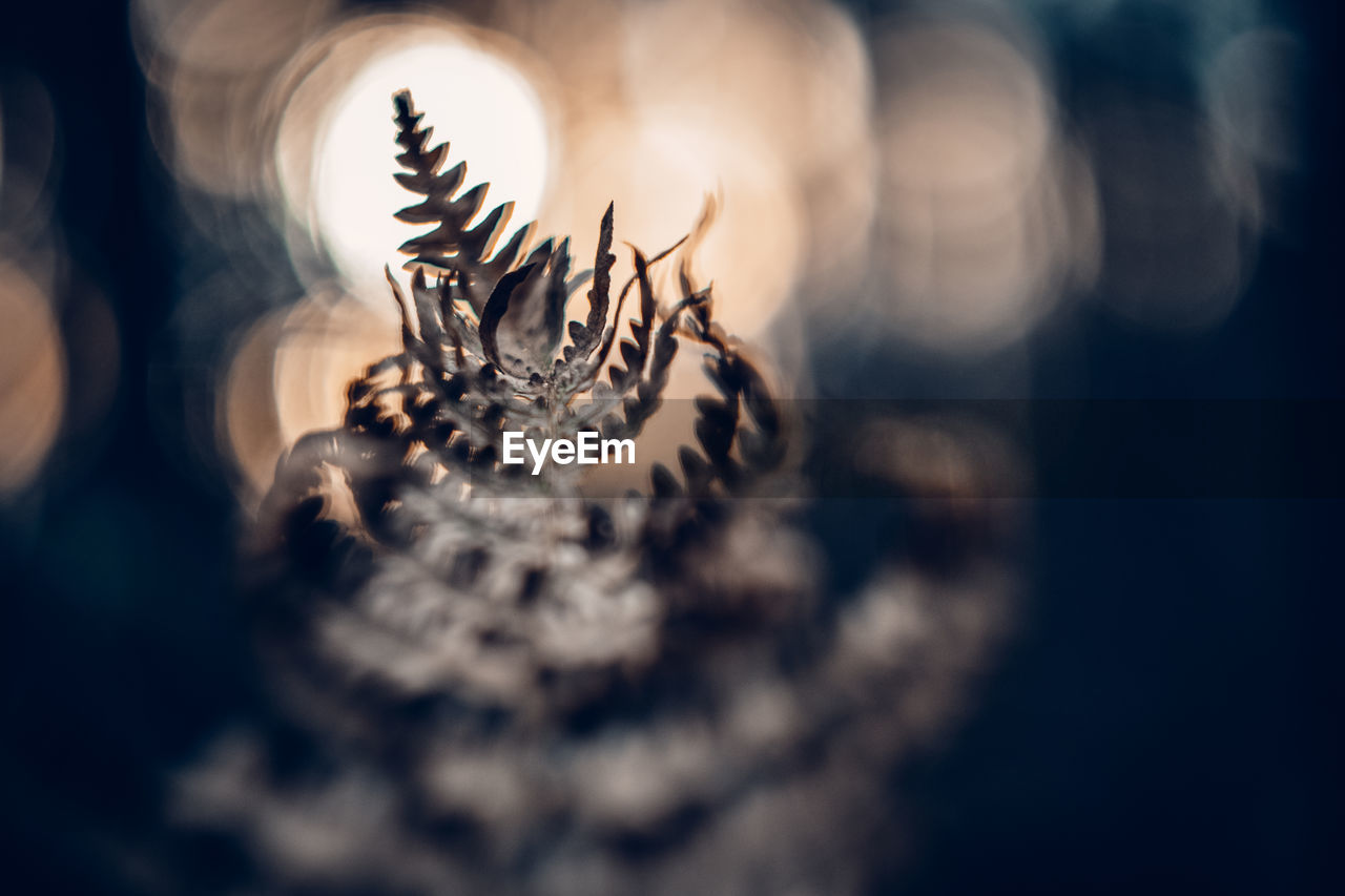 selective focus, close-up, no people, indoors, still life, day, art and craft, nature, table, jewelry, creativity, emotion, personal accessory, design, craft, bone, metal, elegance, large group of objects