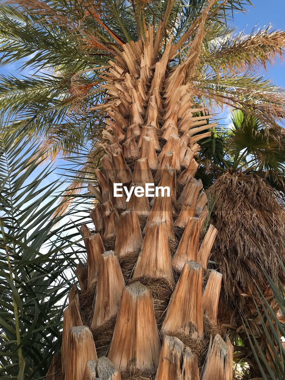 palm tree, tree, growth, tree trunk, low angle view, day, nature, no people, outdoors, beauty in nature, sky