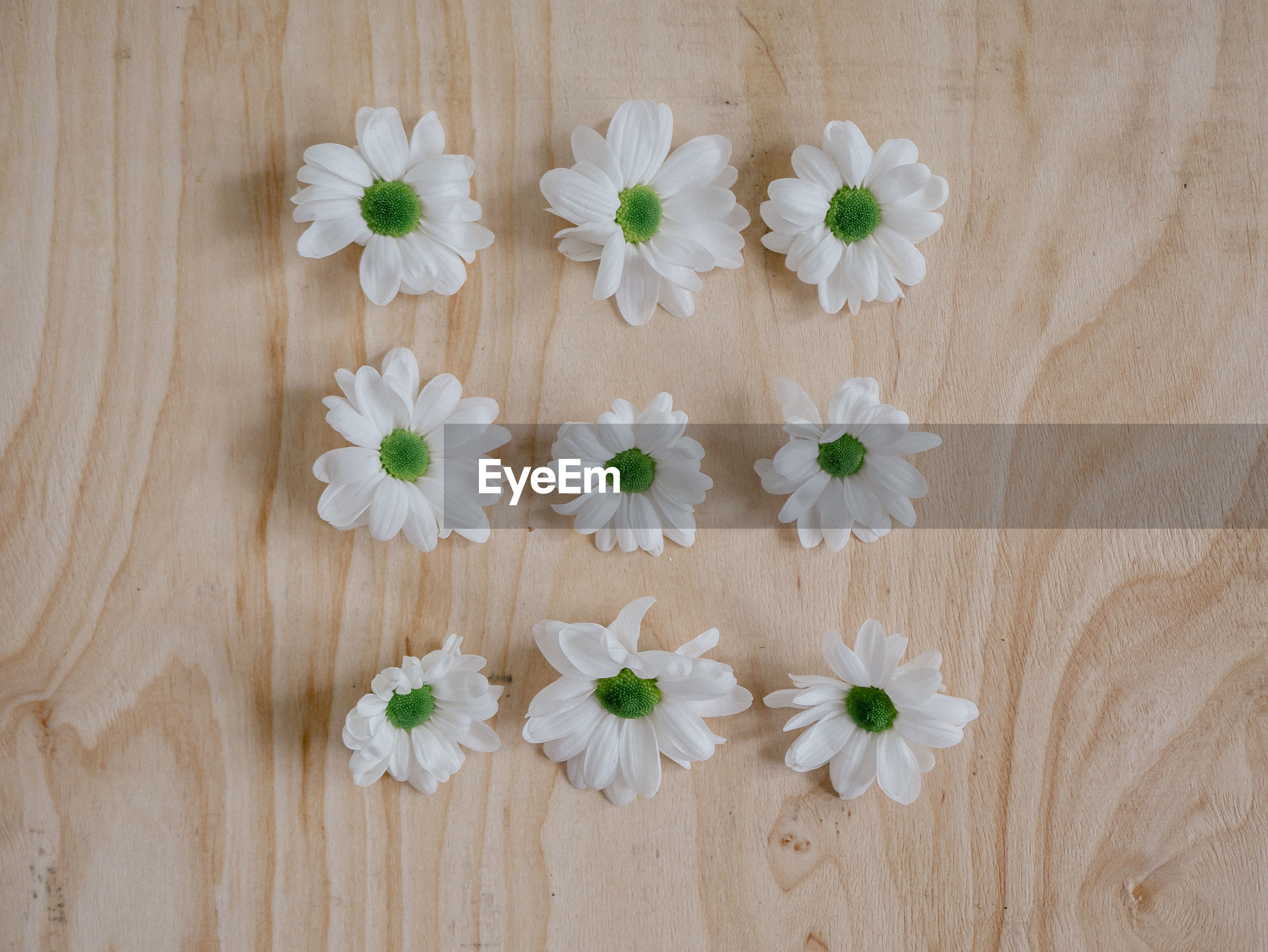 High angle view of chrysanthemum flowers on plea wooden background