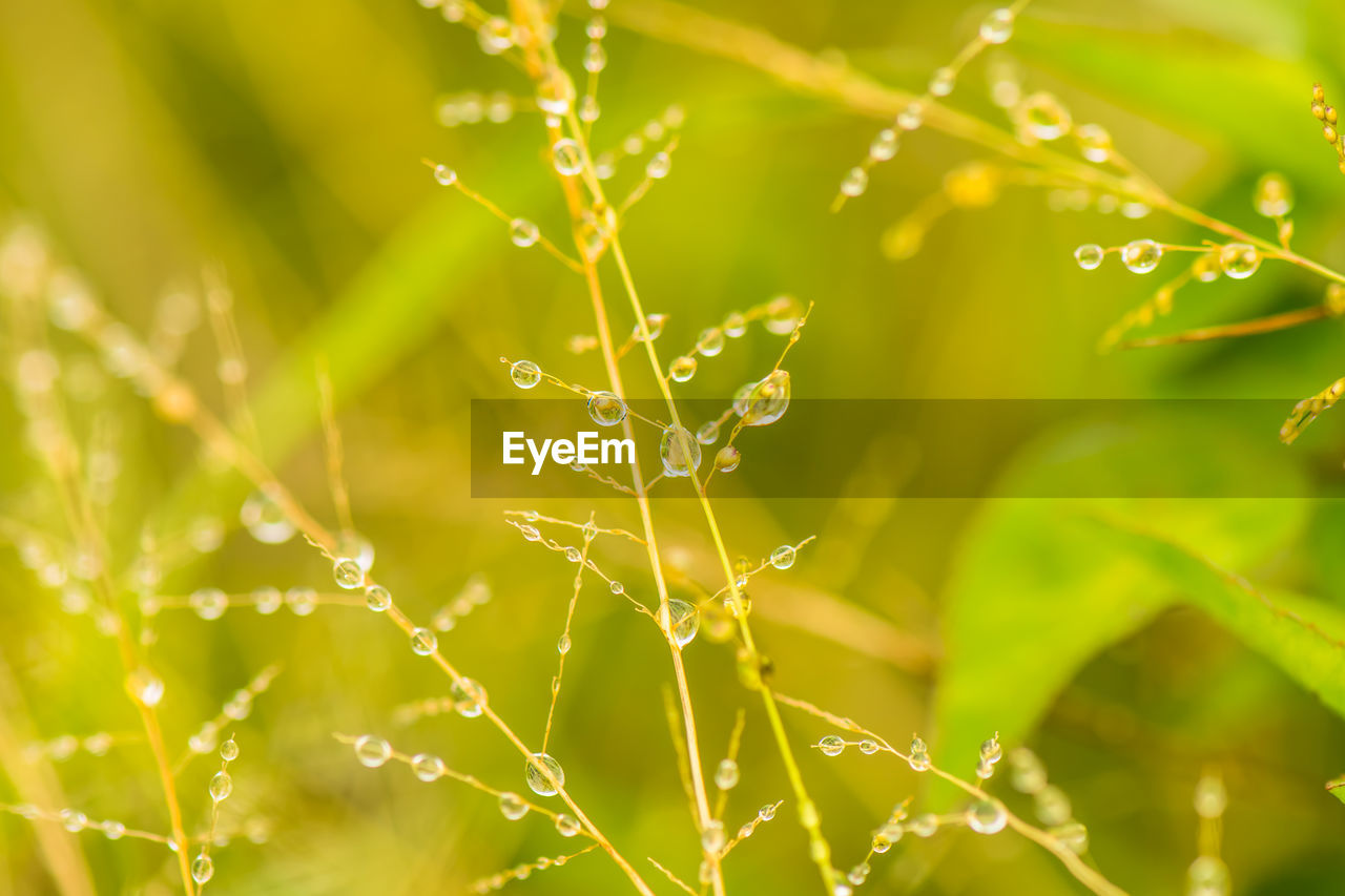 fragility, plant, vulnerability, drop, nature, water, close-up, beauty in nature, wet, selective focus, growth, spider web, green color, no people, focus on foreground, day, freshness, outdoors, leaf, dew, rain, blade of grass, web, raindrop