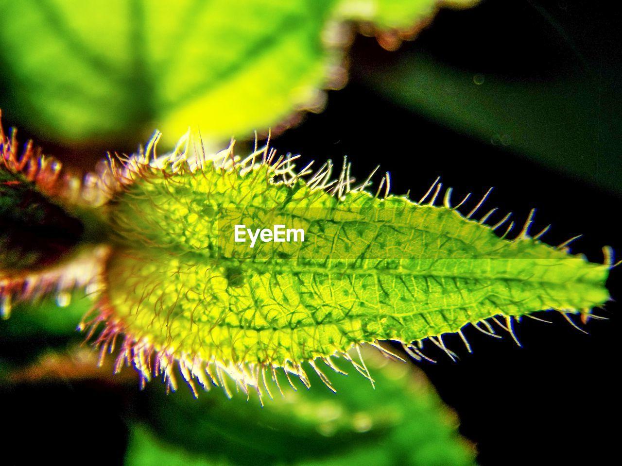 Close-up of spiky leaf