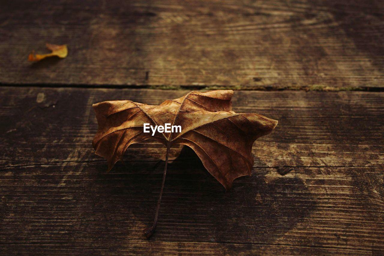 Dry leaves on wood