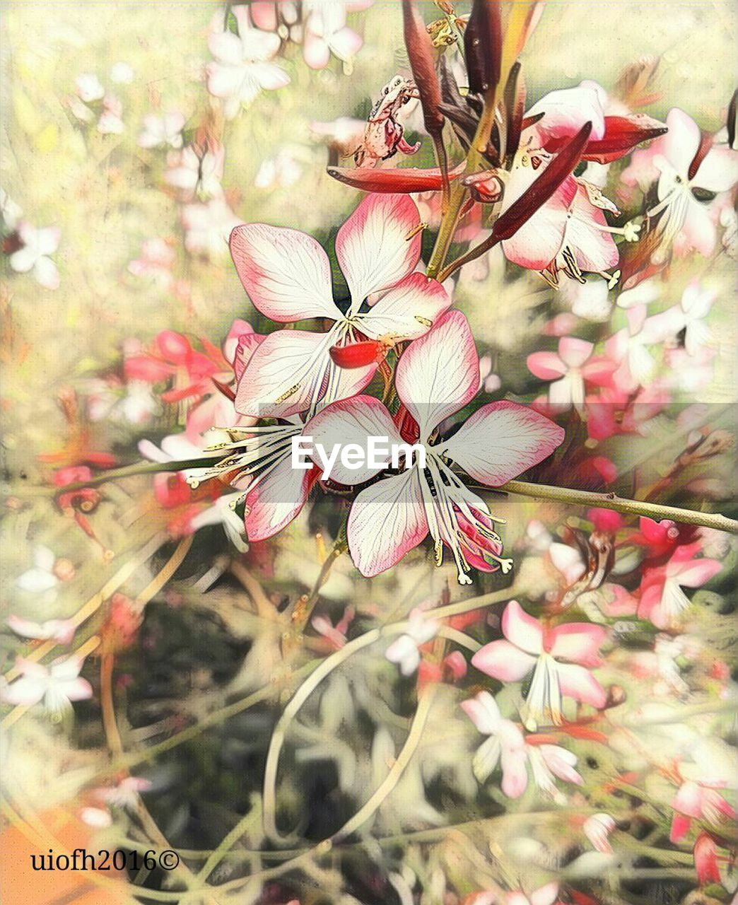 flower, growth, fragility, beauty in nature, blossom, nature, petal, tree, freshness, flower head, springtime, branch, no people, blooming, close-up, day, outdoors