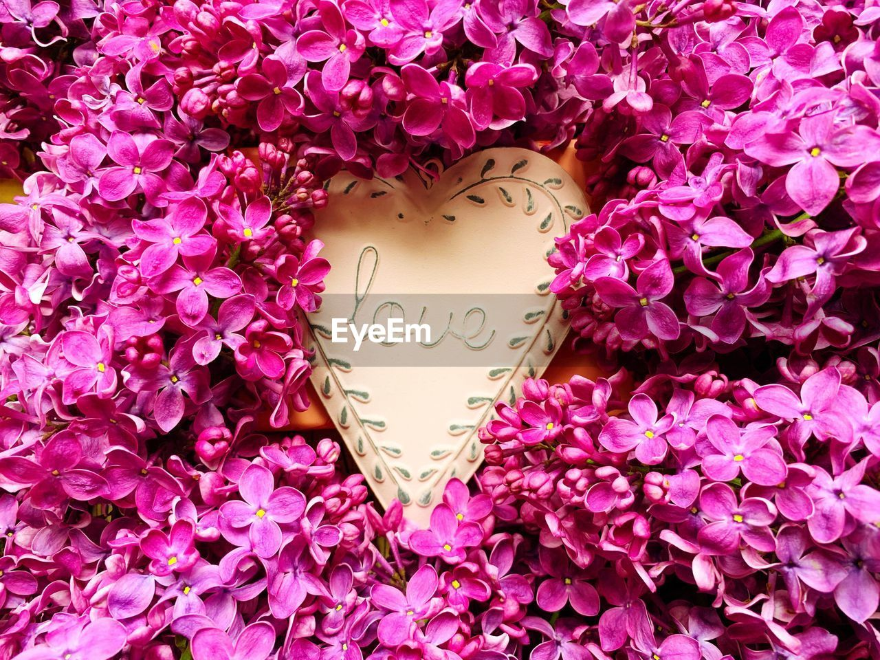 flower, positive emotion, emotion, text, flowering plant, love, plant, close-up, western script, heart shape, no people, beauty in nature, pink color, freshness, communication, nature, fragility, event, vulnerability, message, outdoors, flower head, valentine's day - holiday, purple