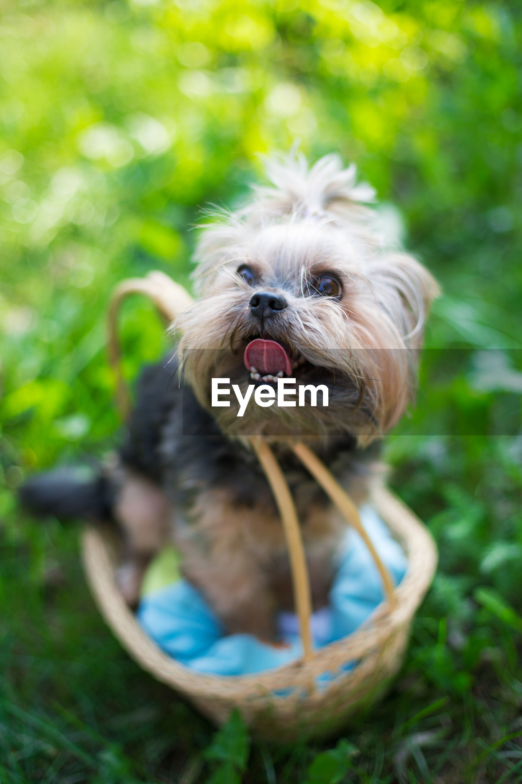 High angle view of dog in basket on field