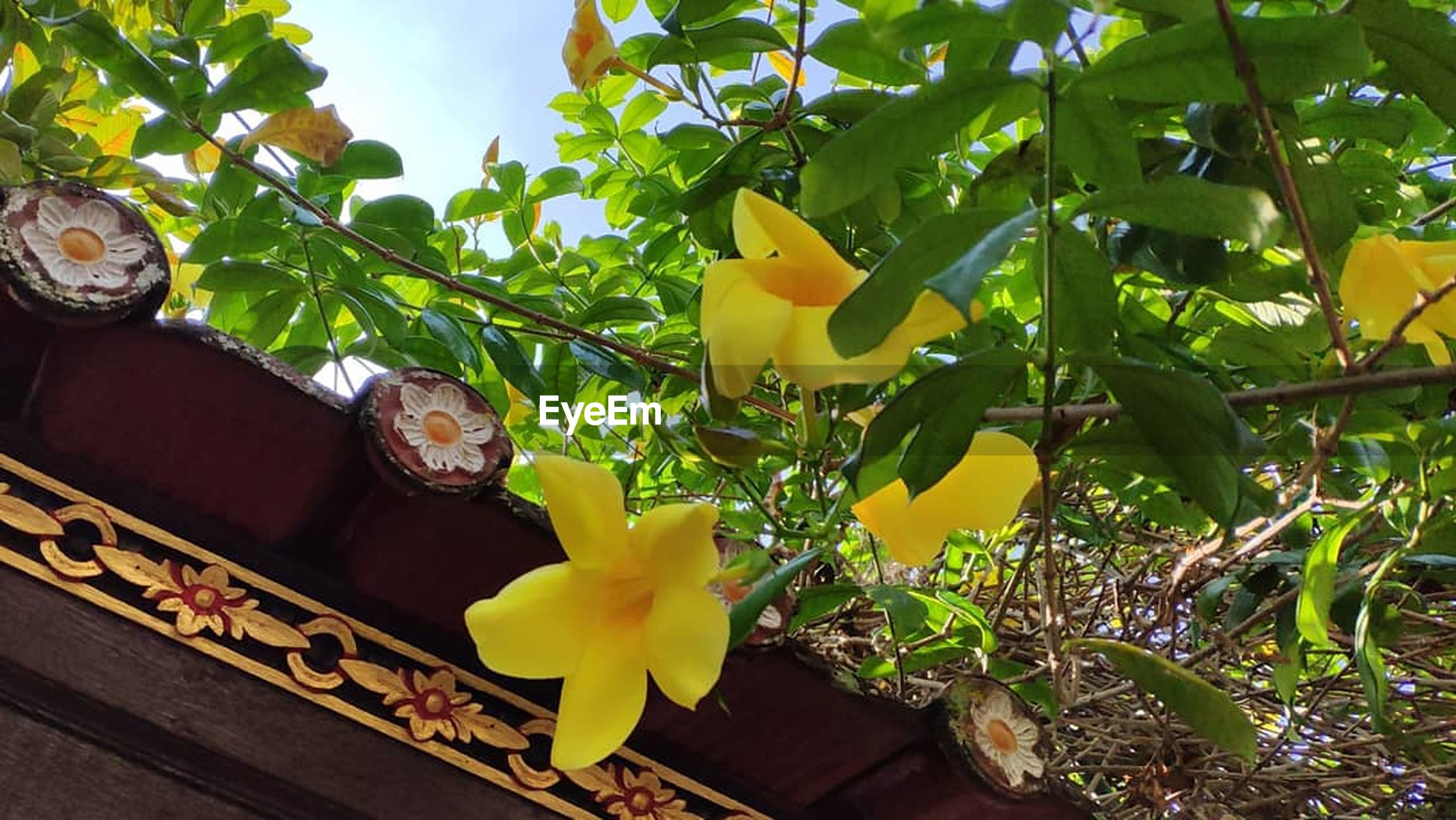 yellow, plant, growth, leaf, plant part, nature, no people, day, green color, freshness, beauty in nature, flowering plant, tree, flower, outdoors, food and drink, close-up, low angle view, food, branch, flower head