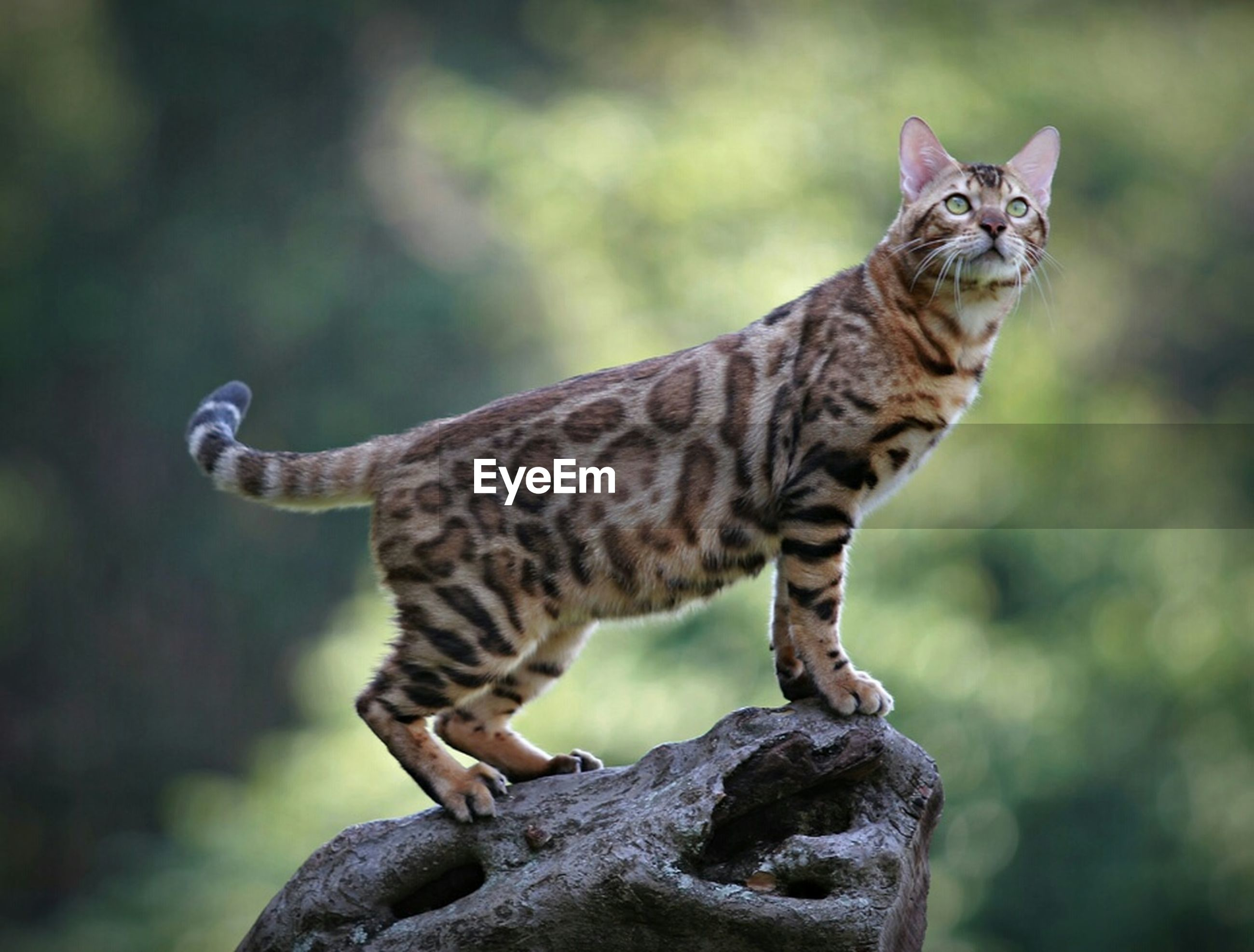animal themes, one animal, mammal, animals in the wild, focus on foreground, wildlife, feline, whisker, looking away, domestic cat, close-up, side view, alertness, portrait, cat, outdoors, full length, sitting, day
