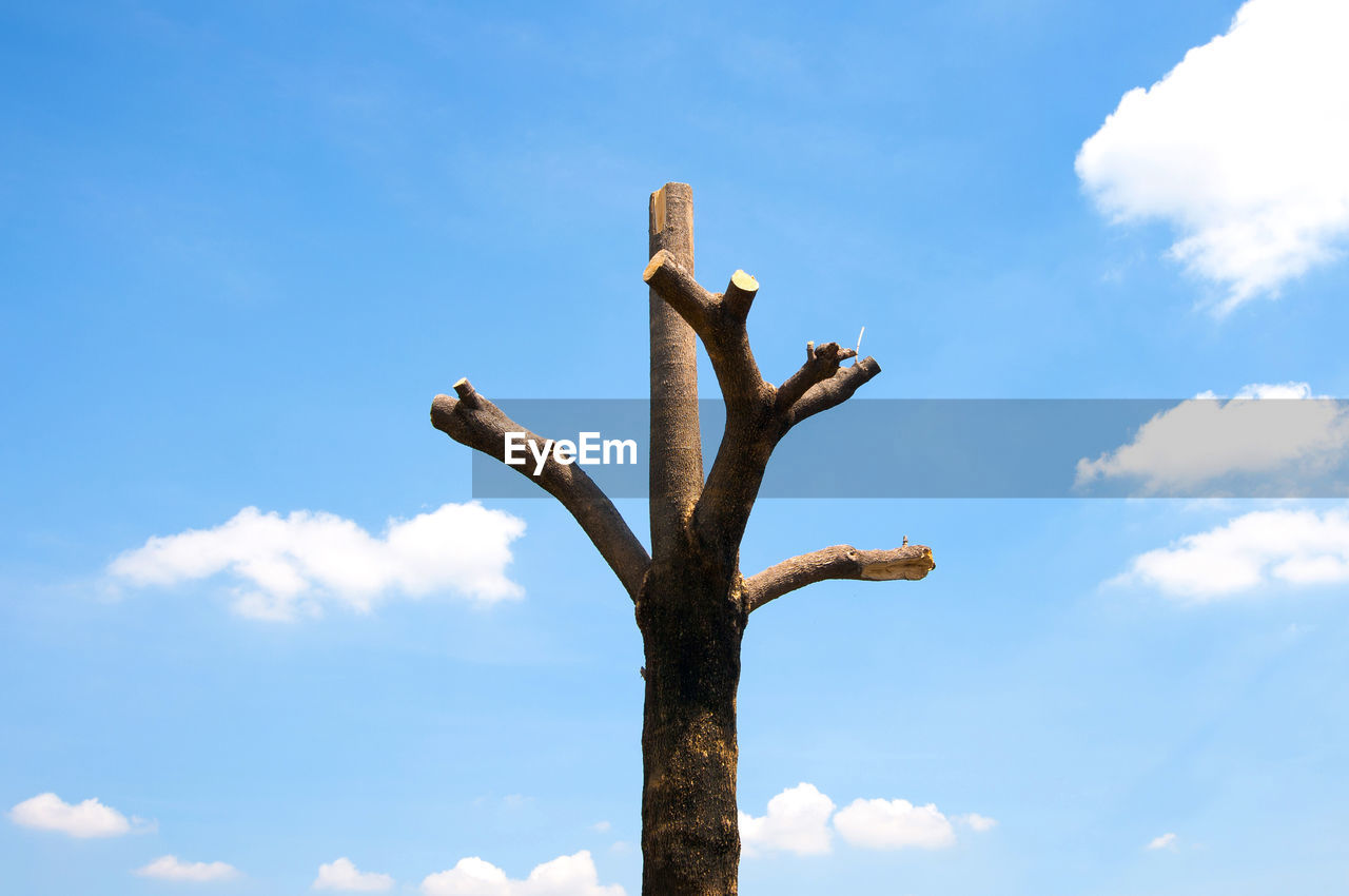 sky, low angle view, cloud - sky, day, nature, no people, tree, sunlight, animal wildlife, animal themes, blue, animal, animals in the wild, outdoors, plant, vertebrate, branch, tree trunk, trunk, wood - material