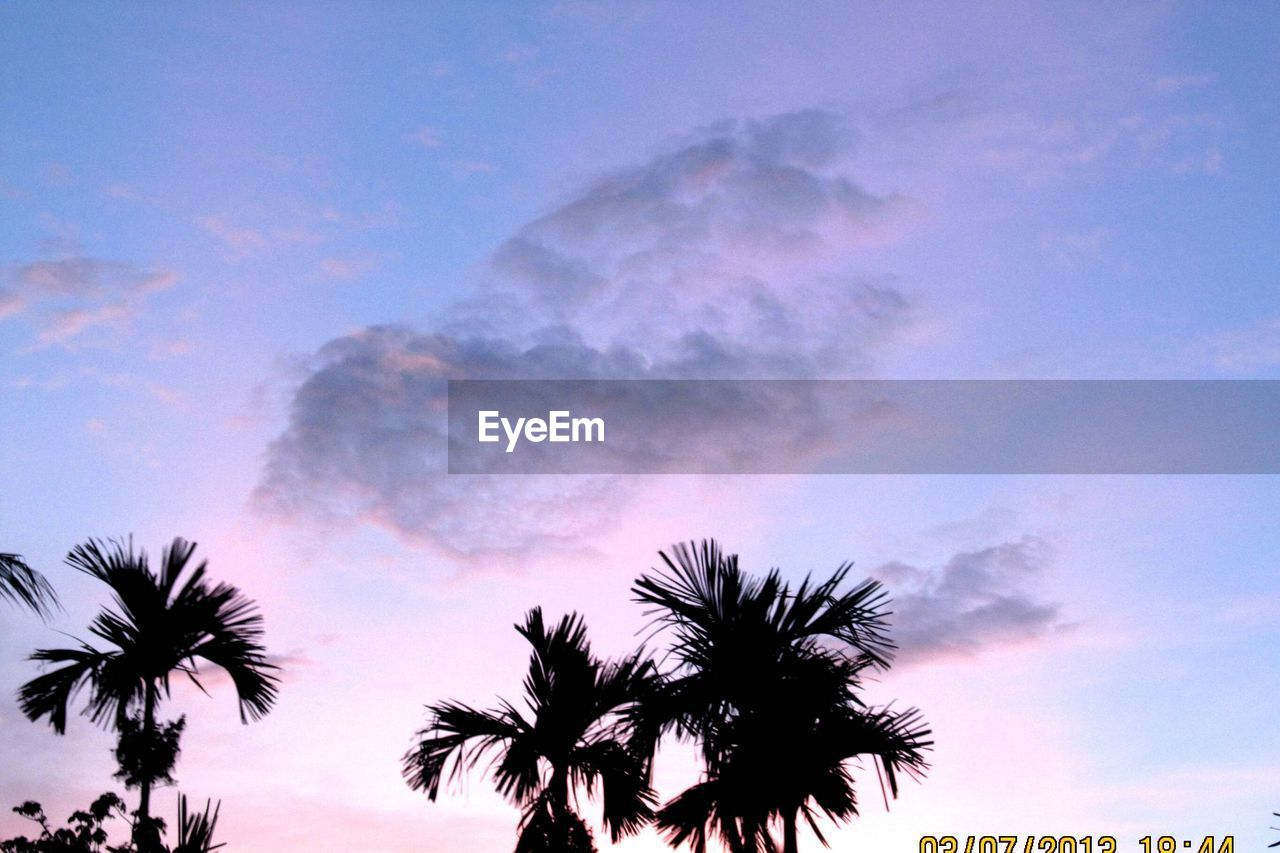 sky, low angle view, beauty in nature, palm tree, tree, silhouette, nature, cloud - sky, sunset, outdoors, scenics, no people, tranquility, growth, day