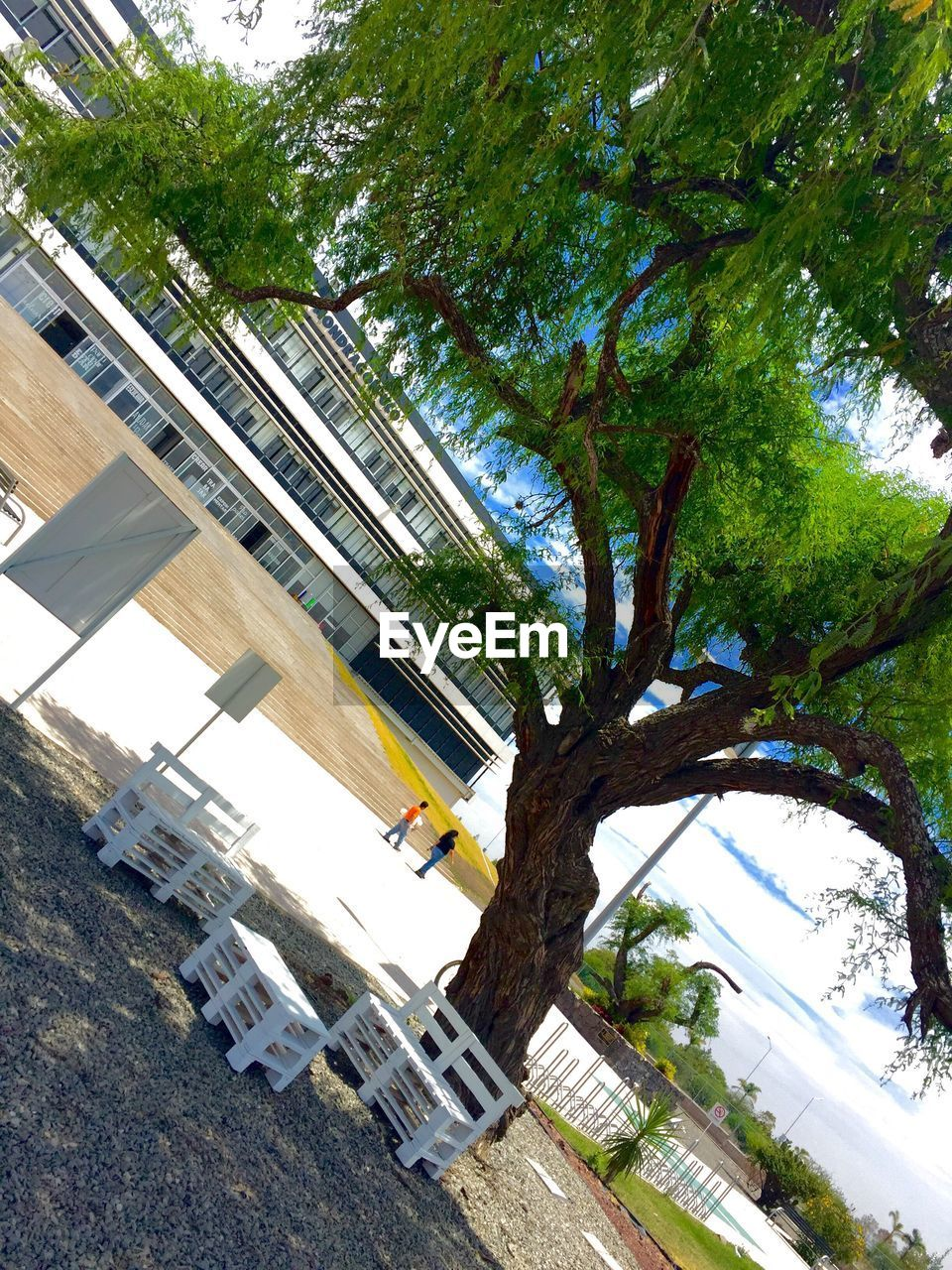 tree, architecture, built structure, building exterior, day, low angle view, no people, outdoors, window, growth, nature, sky