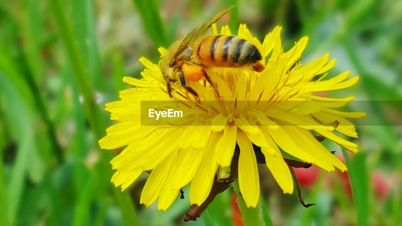 flowering plant, flower, yellow, fragility, animal wildlife, invertebrate, animal themes, vulnerability, petal, animal, animals in the wild, beauty in nature, plant, flower head, growth, one animal, insect, freshness, inflorescence, close-up, pollination, no people, outdoors, pollen