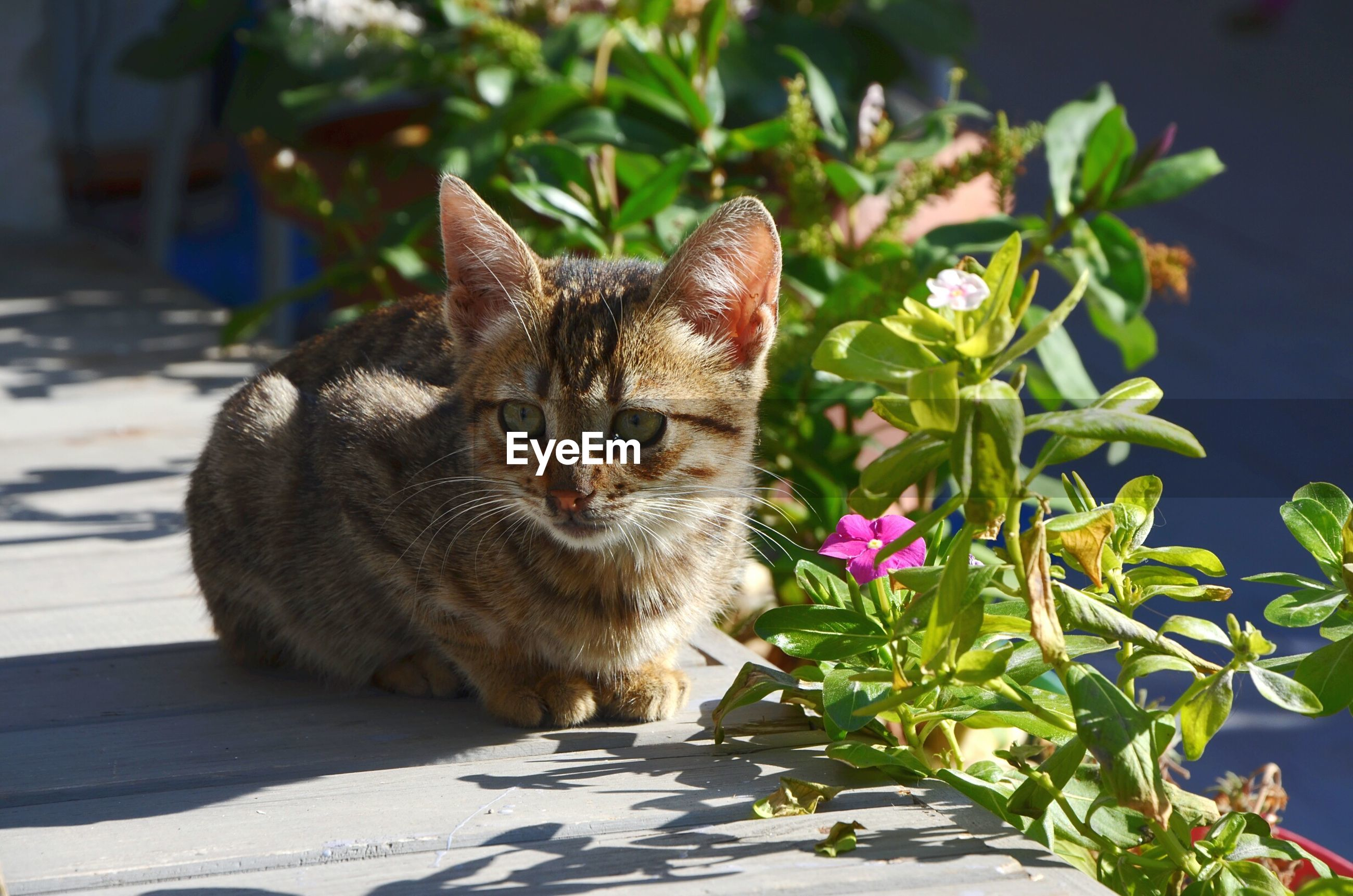 Portrait of cat sitting by flowering plants
