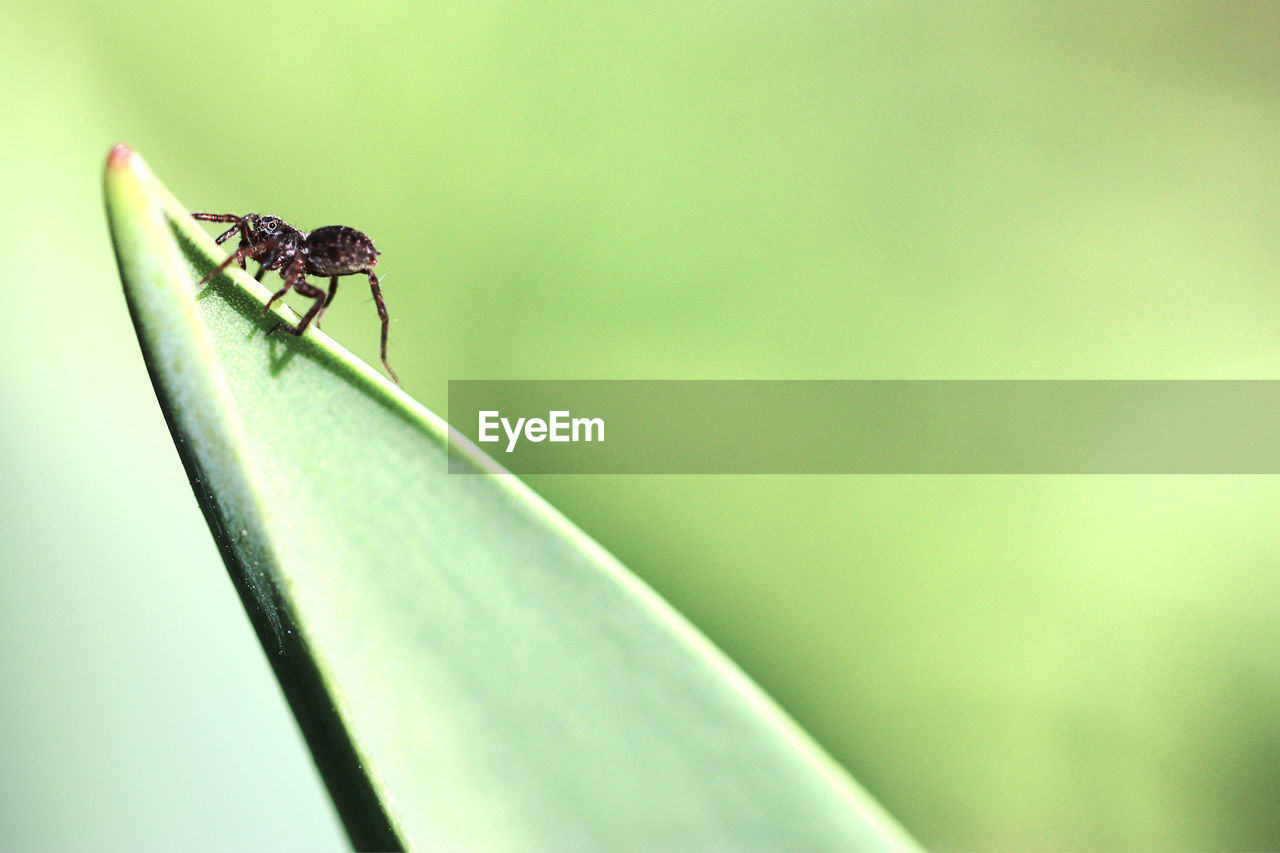 invertebrate, animal wildlife, animals in the wild, one animal, insect, animal themes, animal, close-up, green color, no people, day, plant, selective focus, plant part, nature, focus on foreground, leaf, growth, zoology, outdoors