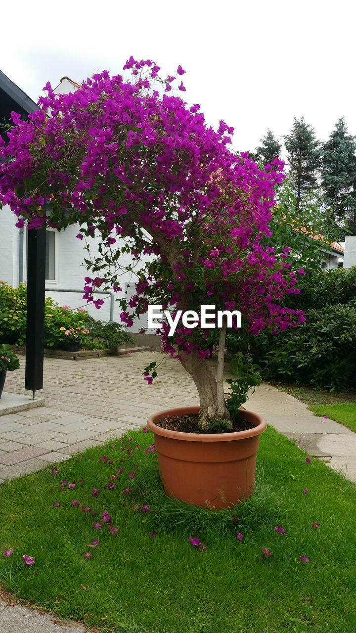 growth, flower, plant, nature, purple, garden, tree, no people, beauty in nature, grass, outdoors, day