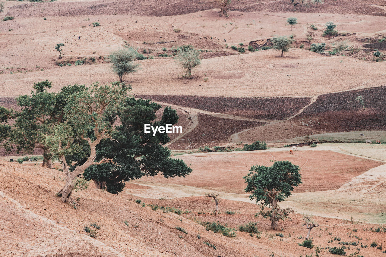 HIGH ANGLE VIEW OF TREES ON DESERT