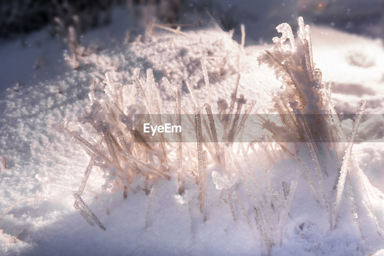 winter, cold temperature, snow, frozen, weather, nature, no people, ice, beauty in nature, close-up, outdoors, day, ice crystal, fragility, freshness, snowflake