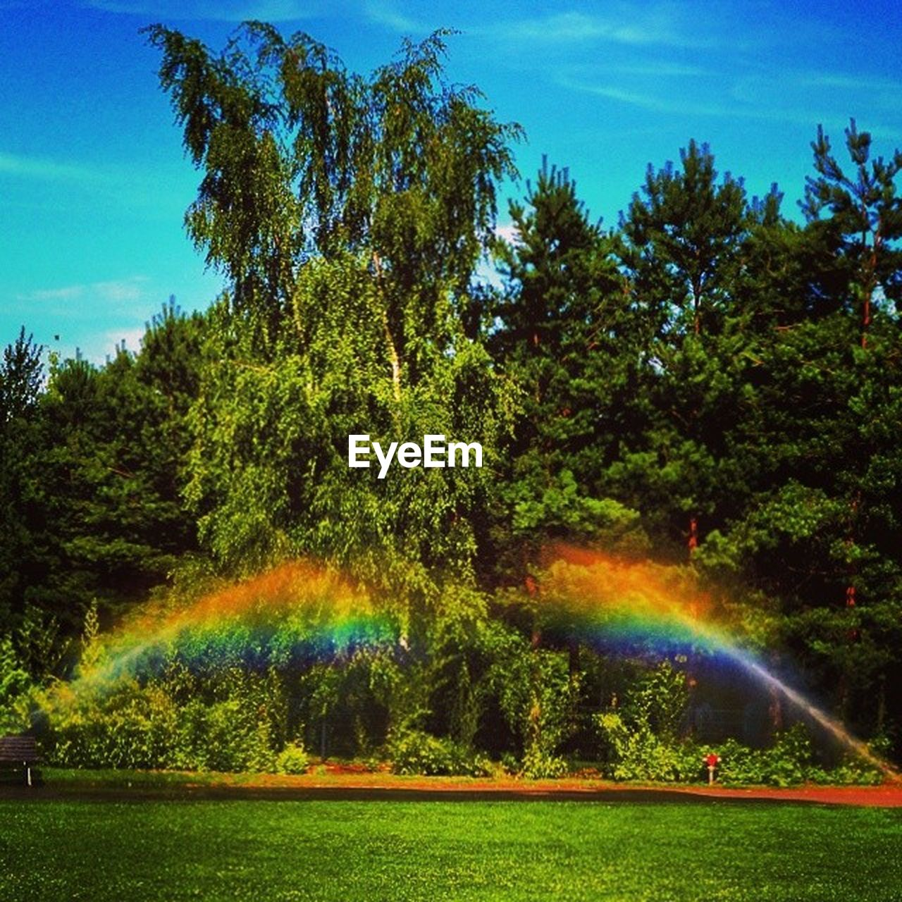 tree, rainbow, nature, beauty in nature, day, double rainbow, sky, outdoors, growth, scenics, multi colored, sunlight, grass, water, no people