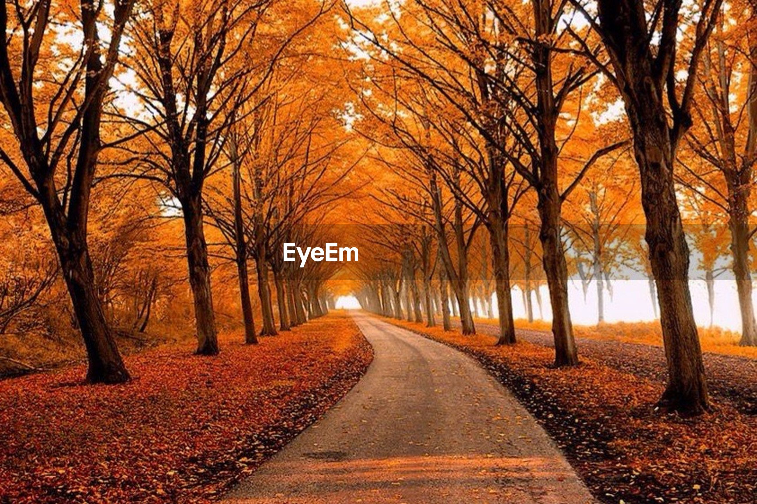 the way forward, tree, diminishing perspective, vanishing point, transportation, road, bare tree, sunset, orange color, tranquility, tranquil scene, nature, treelined, autumn, country road, beauty in nature, scenics, empty road, tree trunk, branch