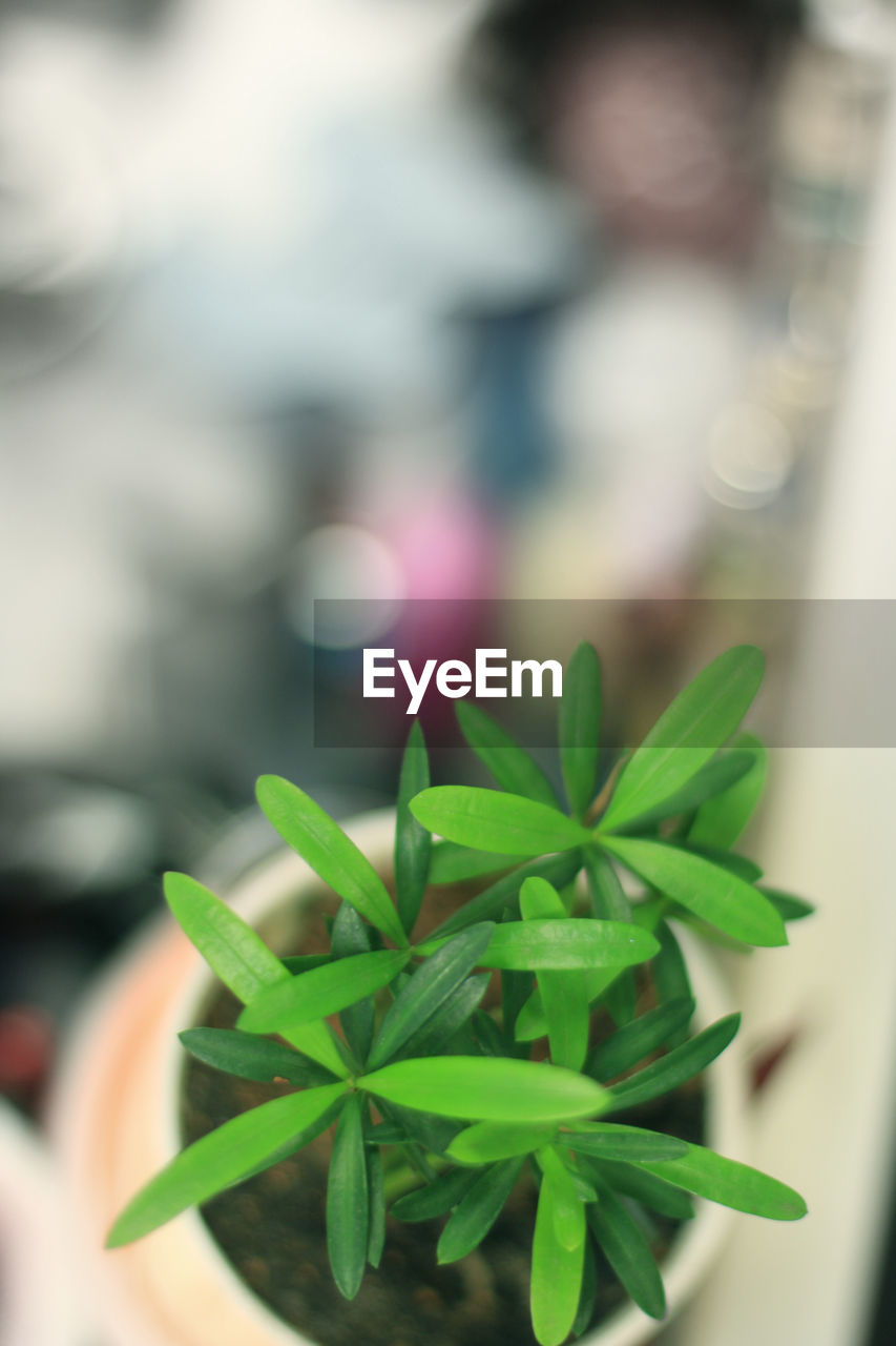 green color, leaf, focus on foreground, close-up, freshness, plant, day, no people, nature, outdoors, fragility, beauty in nature