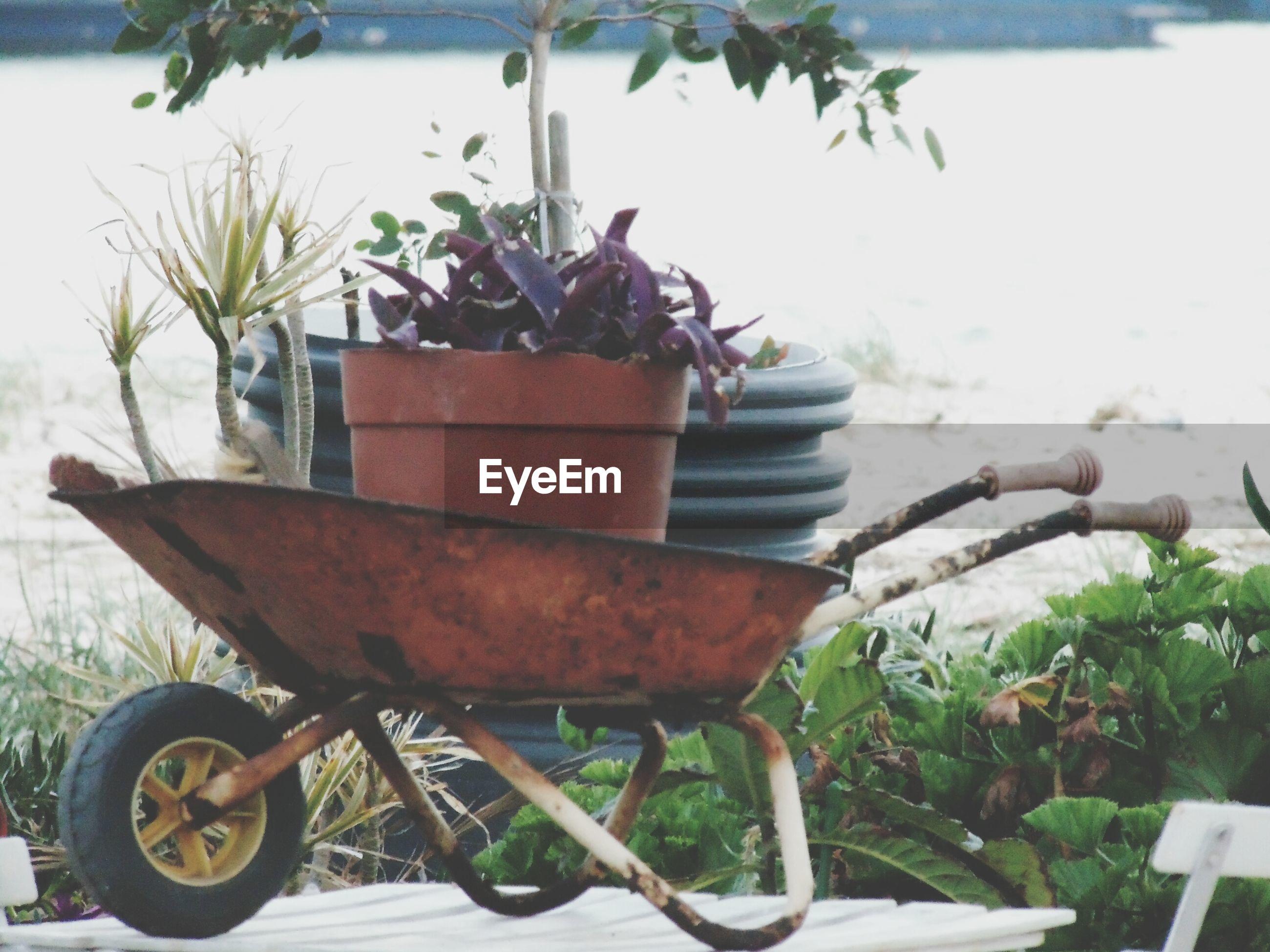 Potted plant on wheelbarrow in yard