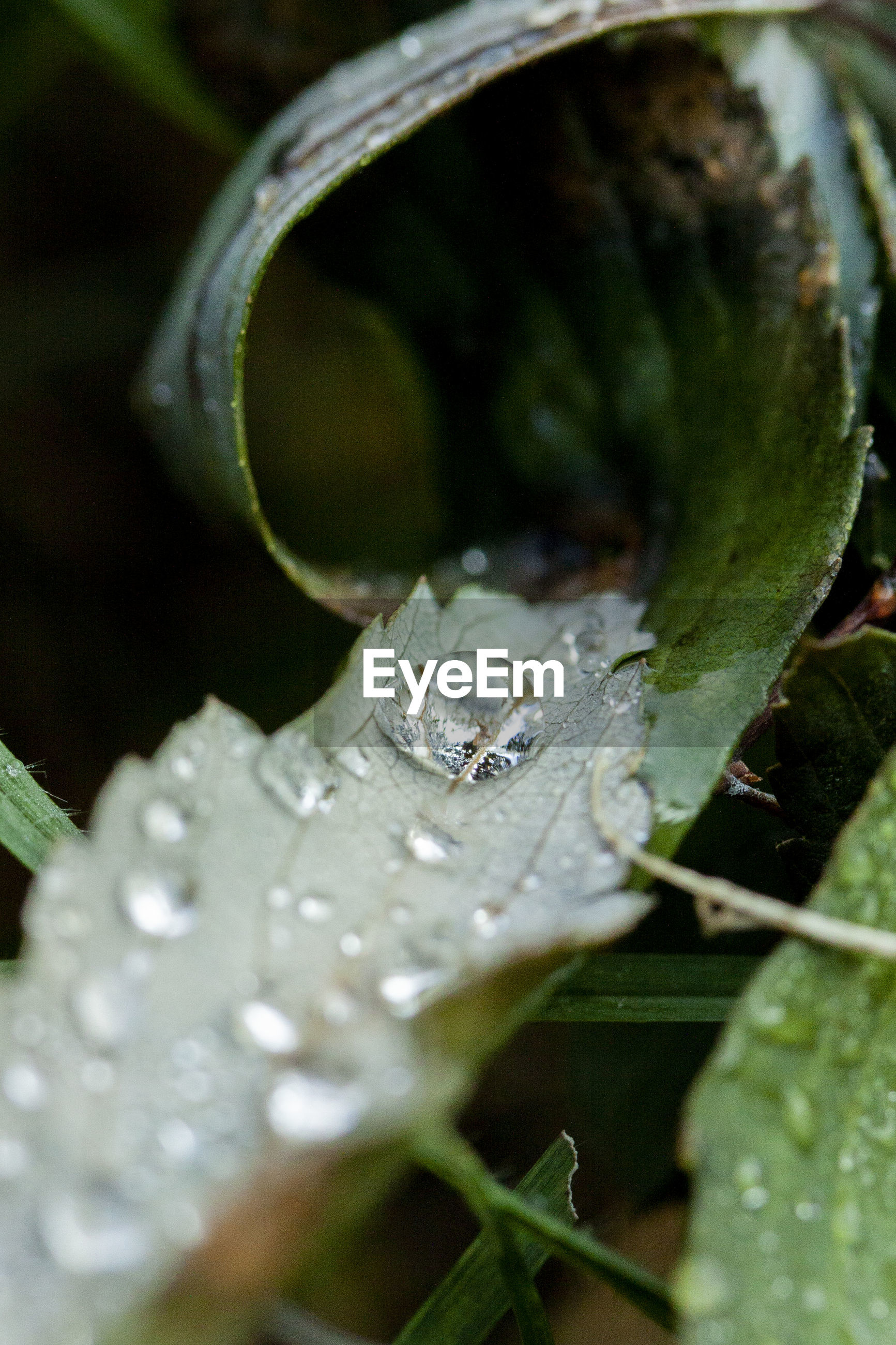 CLOSE-UP OF WATER DROPS ON A LEAF