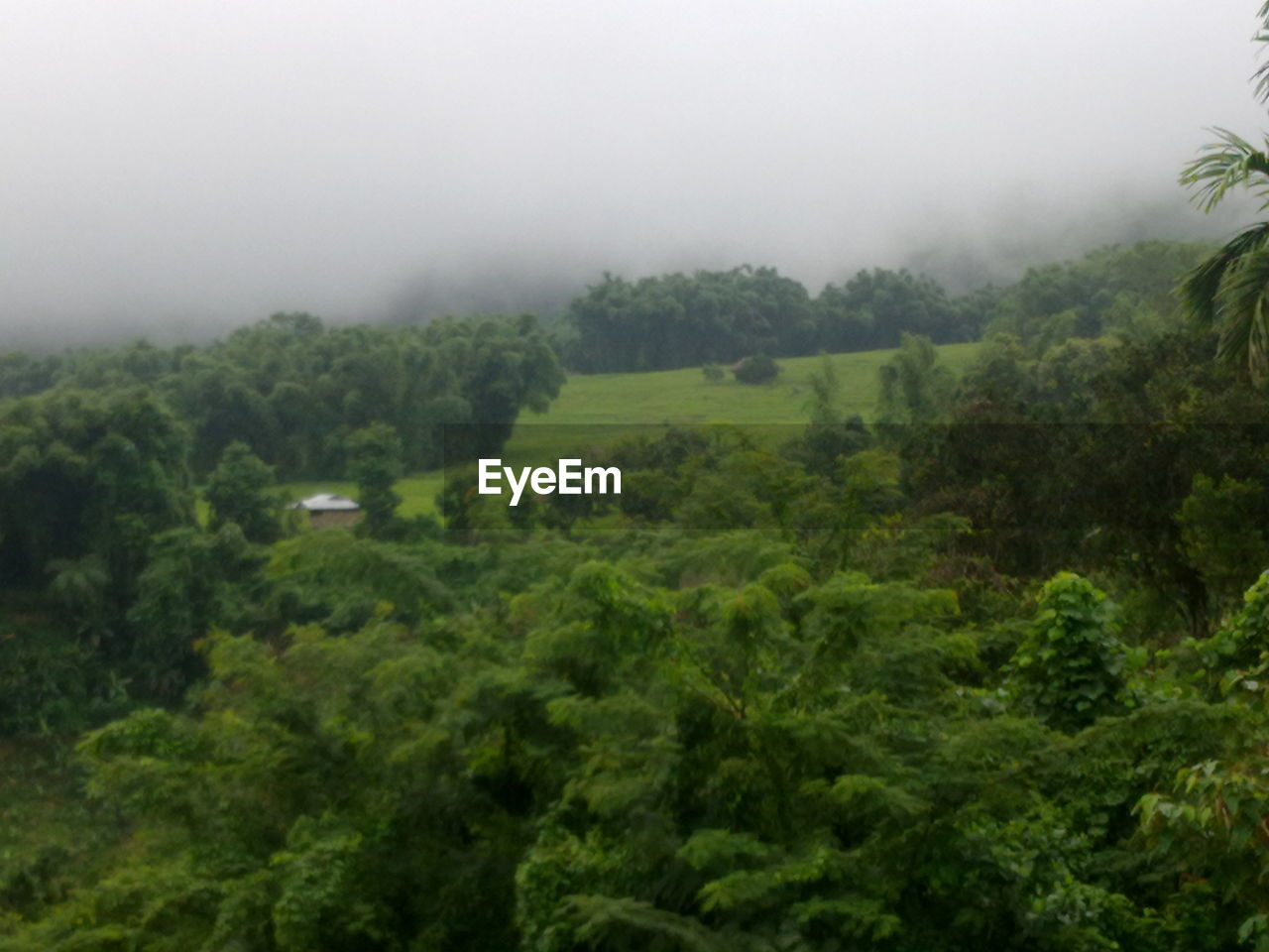 nature, fog, landscape, beauty in nature, tranquility, no people, scenics, tranquil scene, tree, mist, day, green color, forest, hazy, outdoors, tea crop, sky