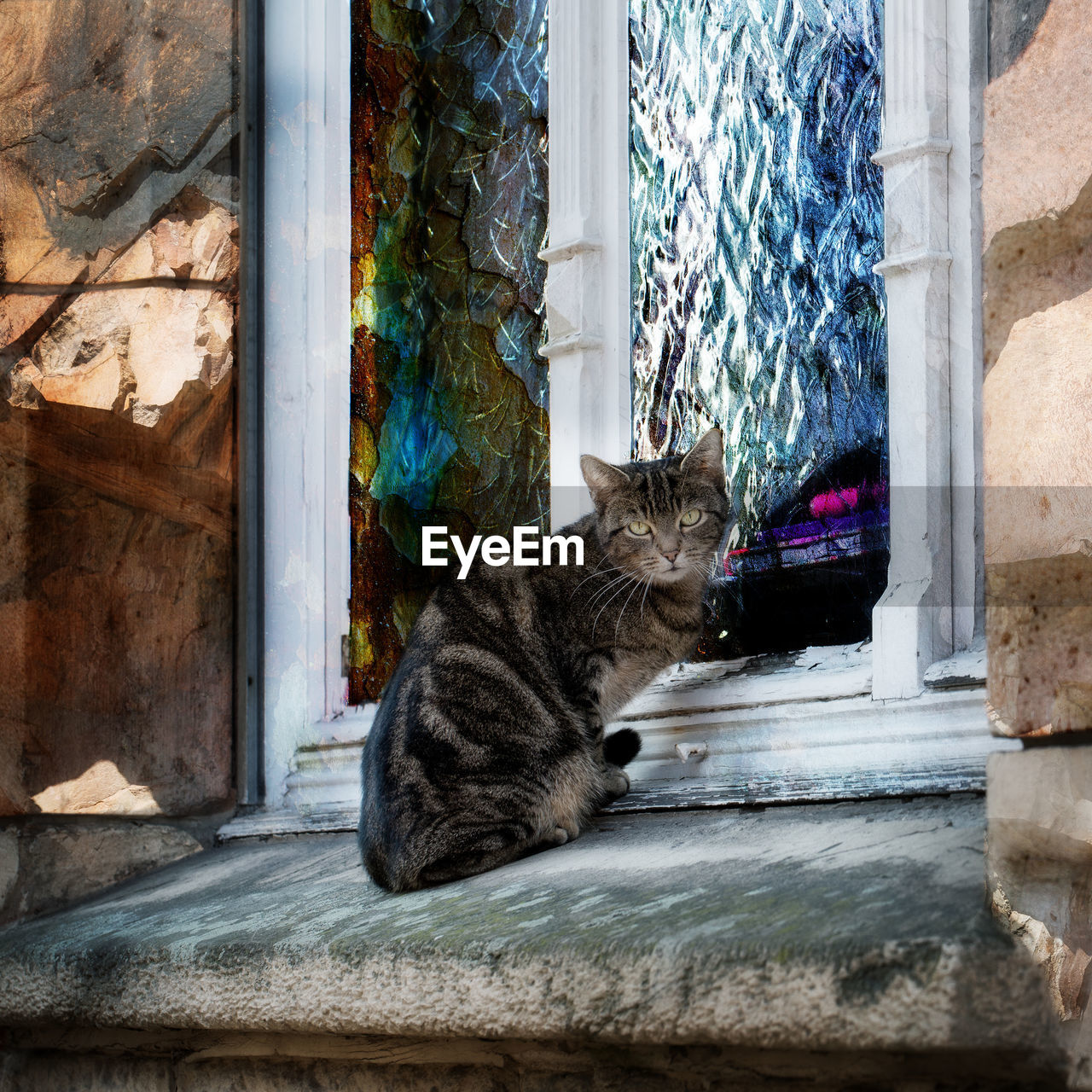 cat, domestic cat, domestic, pets, feline, domestic animals, animal, mammal, animal themes, one animal, vertebrate, window, sitting, no people, relaxation, day, architecture, portrait, window sill, built structure, whisker, maine coon cat