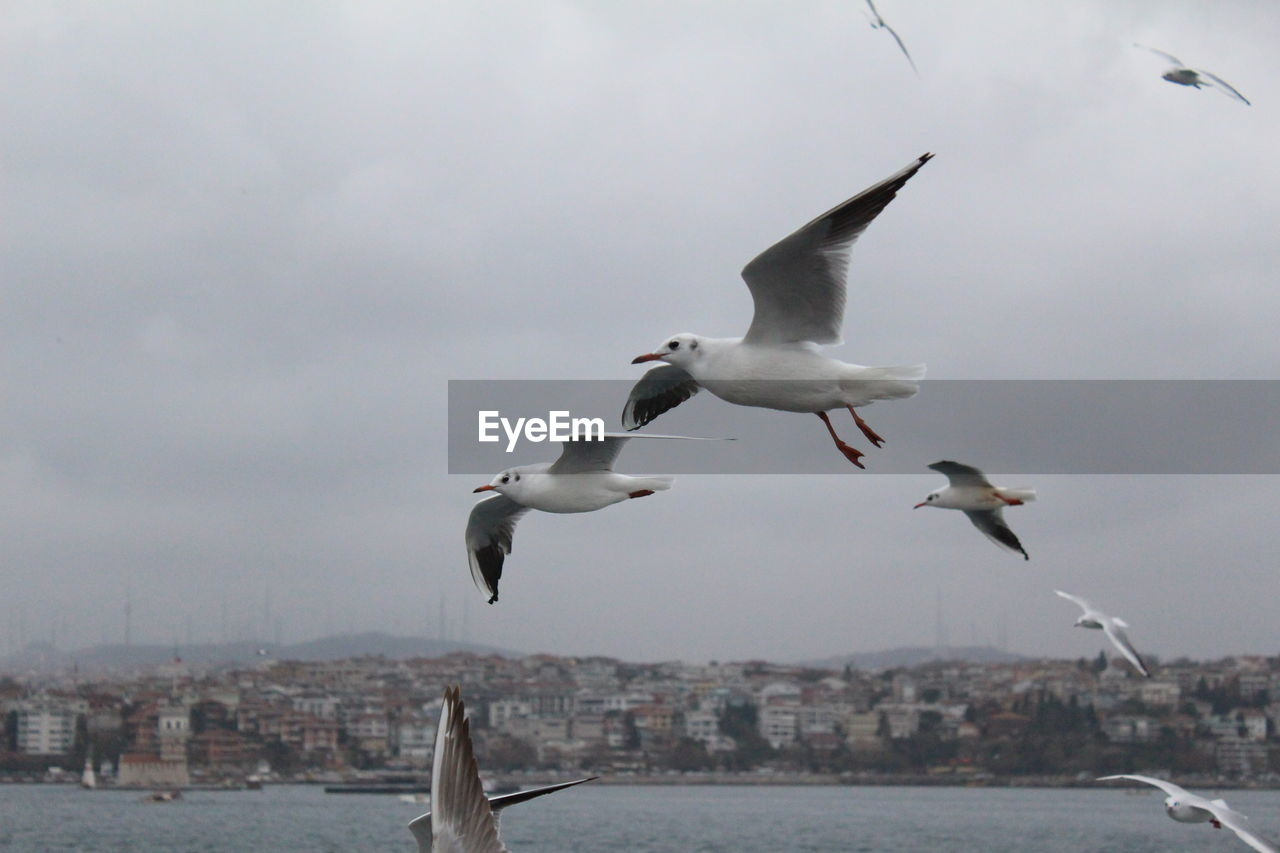 Seagulls flying over sea by city against sky