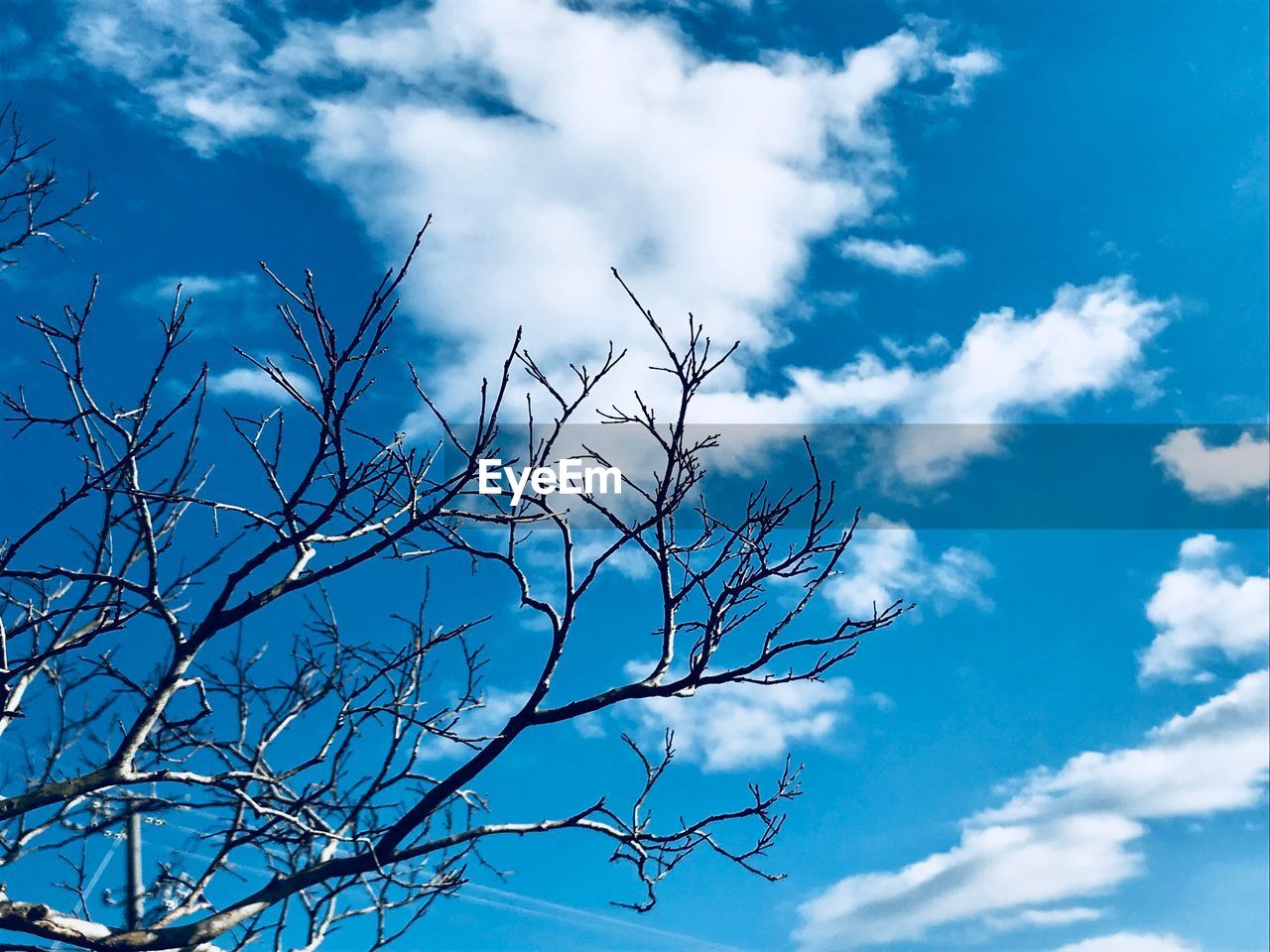 low angle view, sky, nature, cloud - sky, beauty in nature, blue, day, outdoors, no people, bird, animals in the wild, branch, animal themes, tree